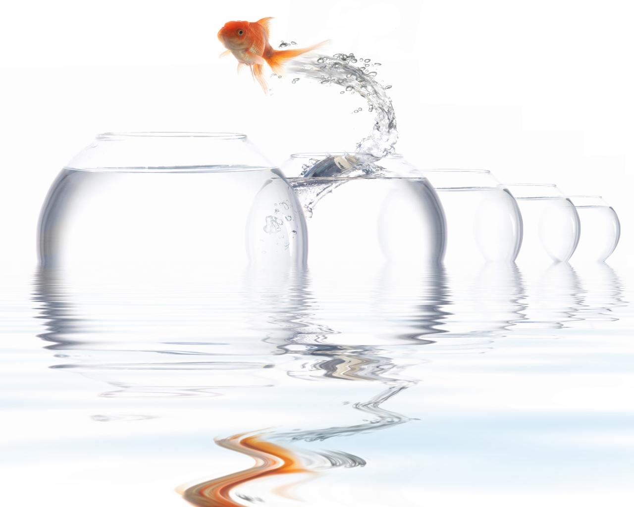 Masaüstü çizim Boyama Illüstrasyon Su Balık Içki şişe