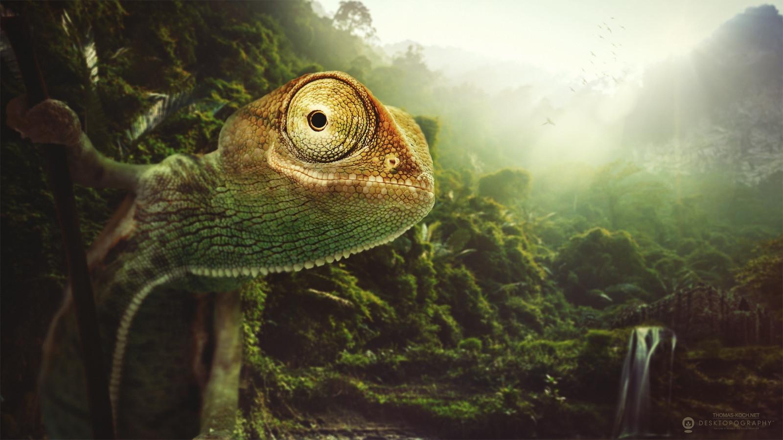 chameleon wallpaper 1920x1200 - photo #4