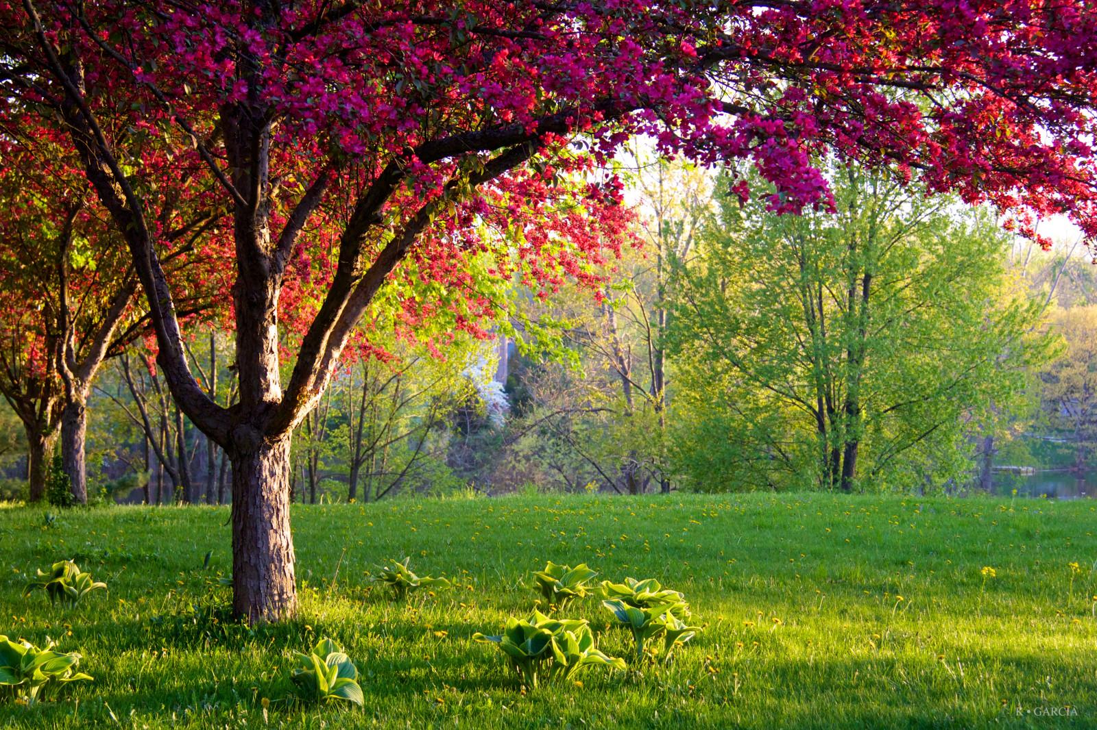Fondos de pantalla luz de sol paisaje bosque jard n - Paisajes y jardines ...