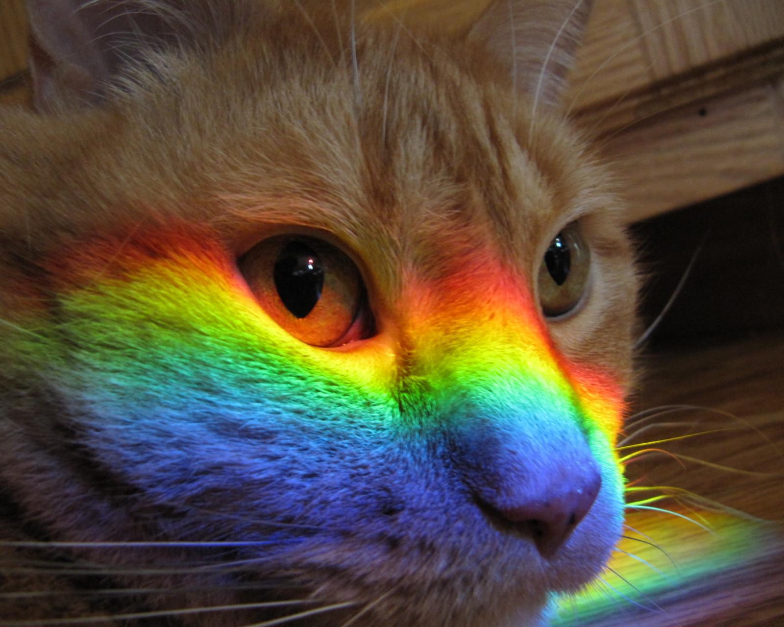 Подводная, смешные картинка с радугой