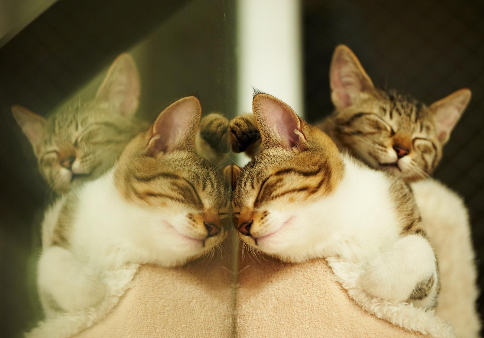 Котики в картинках котиков смотрим, открытки