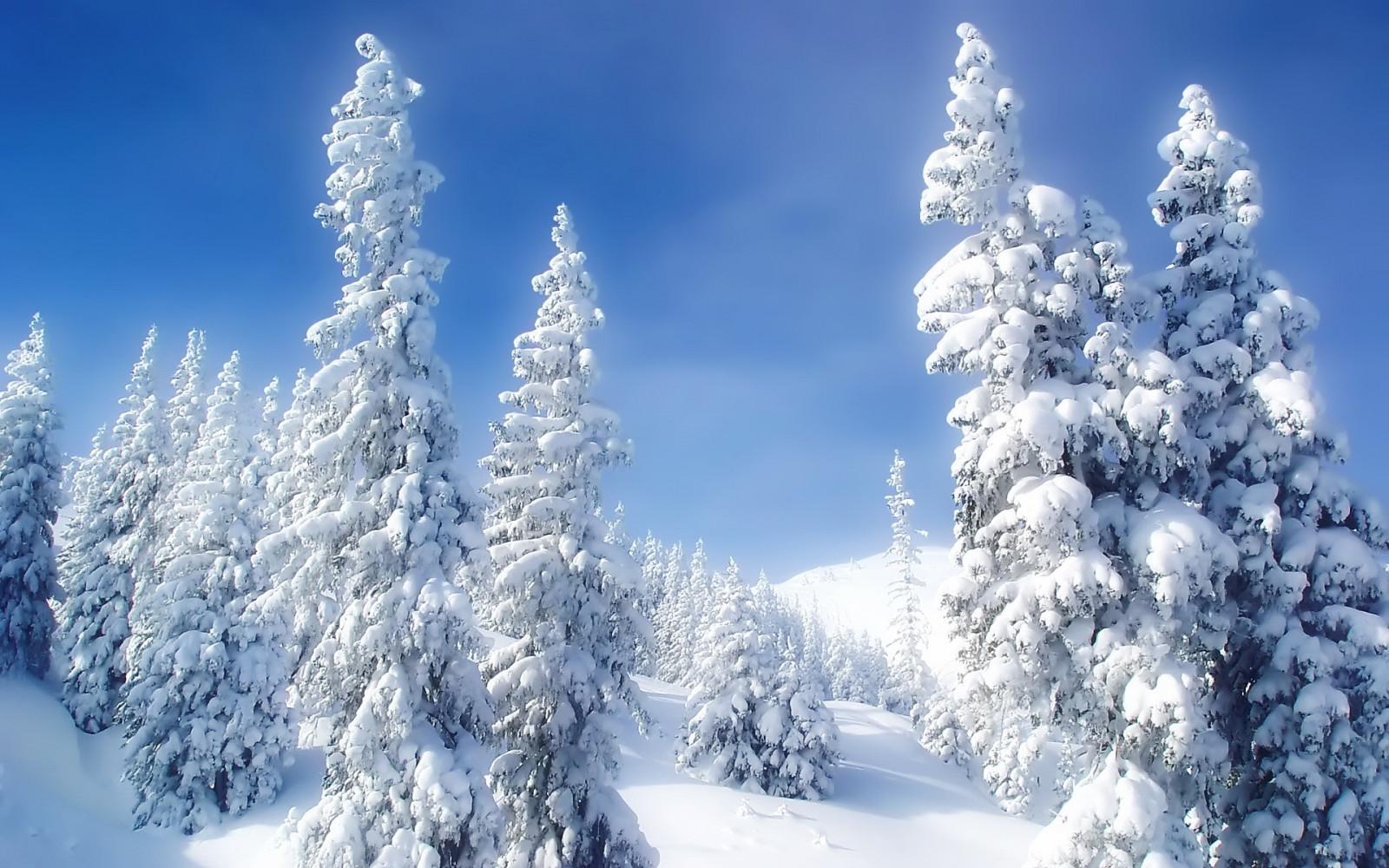 fond d 39 cran paysage for t la nature neige hiver branche gel pic a sapin gel arbre. Black Bedroom Furniture Sets. Home Design Ideas