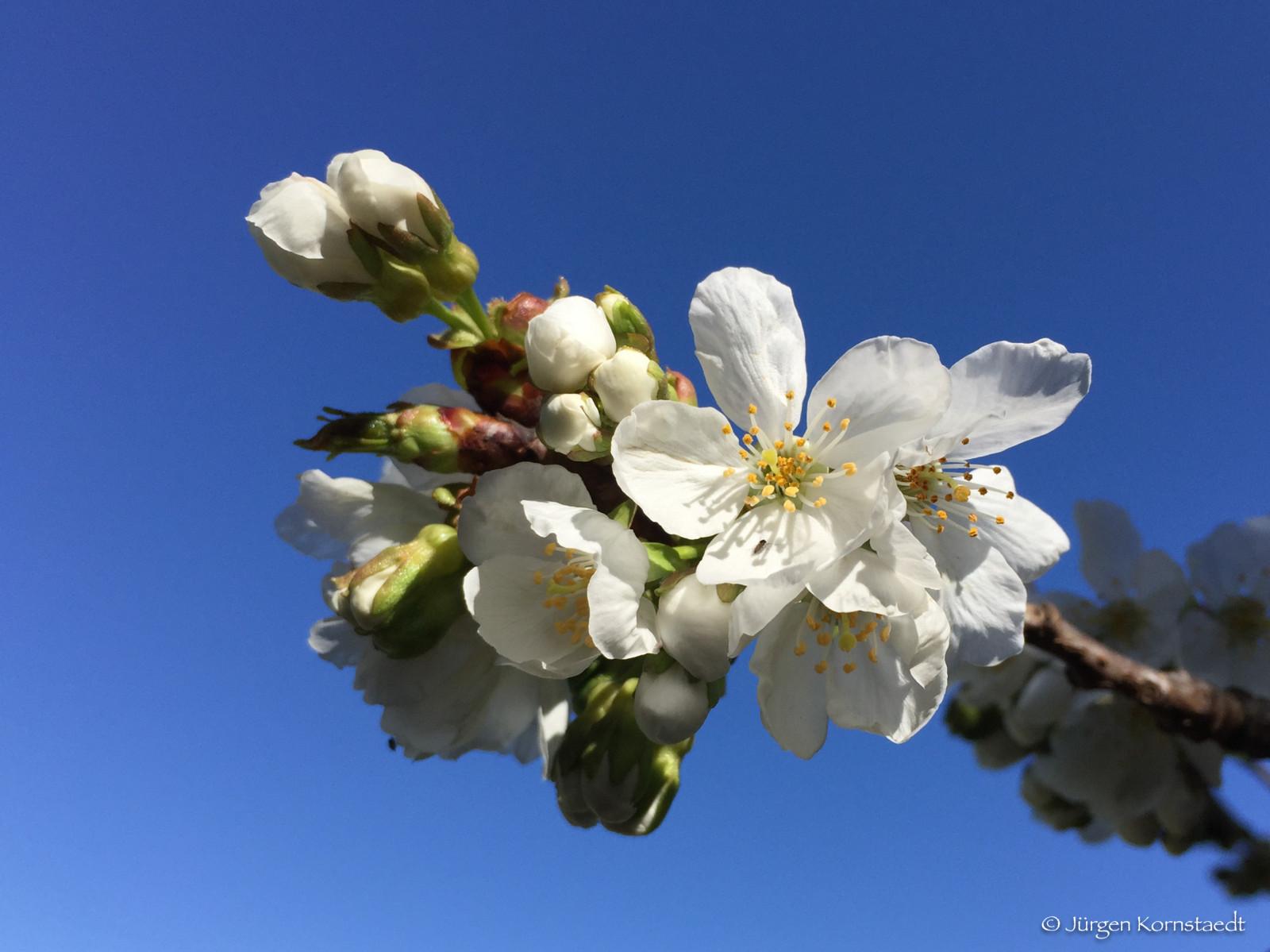 Fond D Ecran Ciel Blanc Branche Printemps Brindille Fleur De
