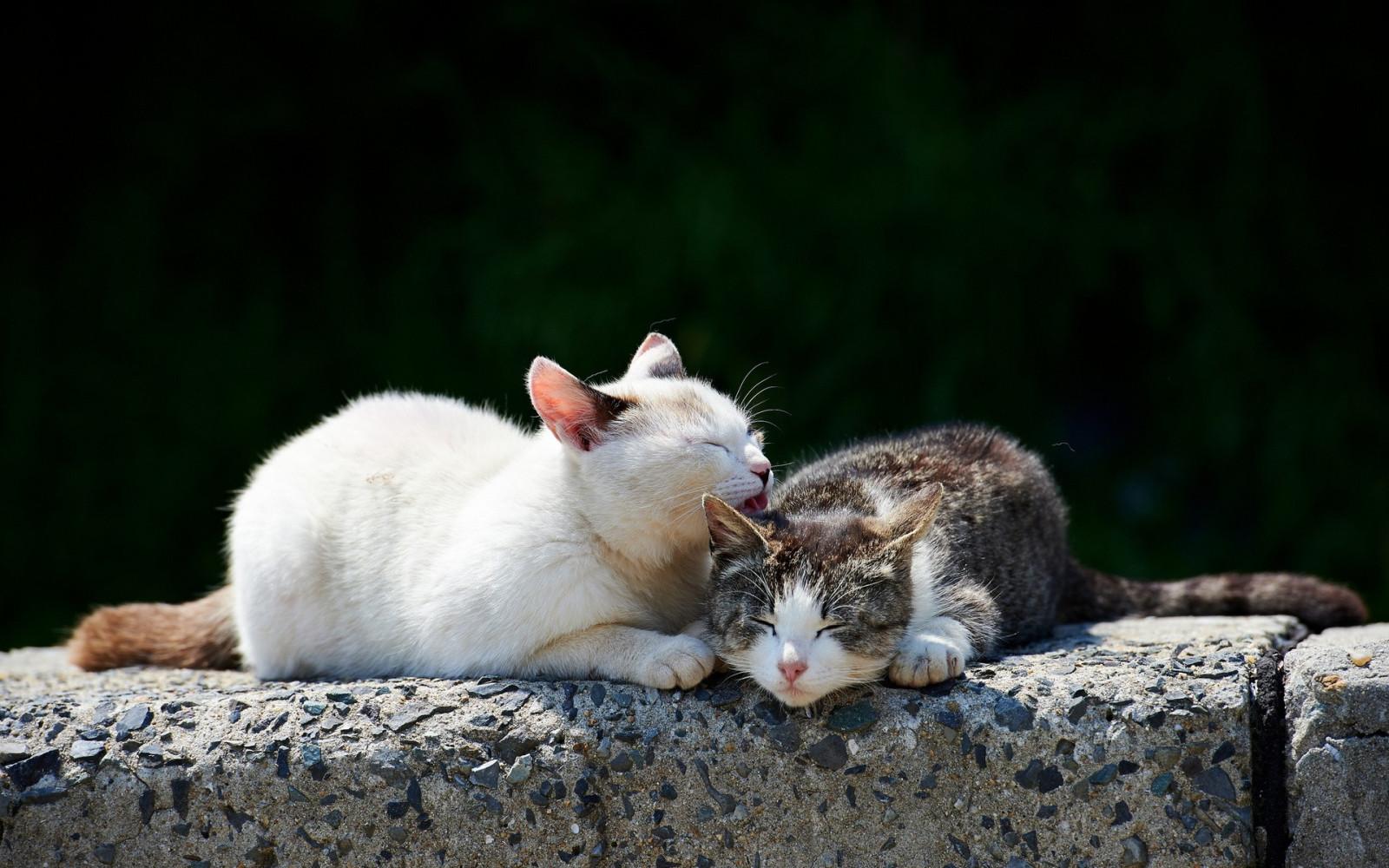 Открытки, смешные картинки влюбленные котики