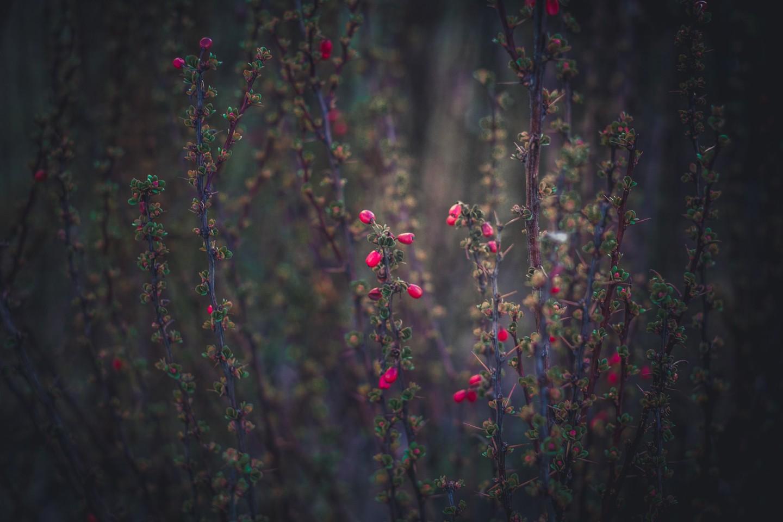 Sfondi Luce Del Sole Fiori Natura Rosso Riflessione Erba