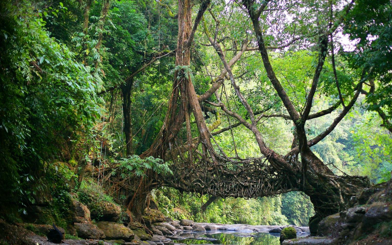 fond d 39 cran des arbres la nature branche vert pont rivi re r gion sauvage jungle. Black Bedroom Furniture Sets. Home Design Ideas