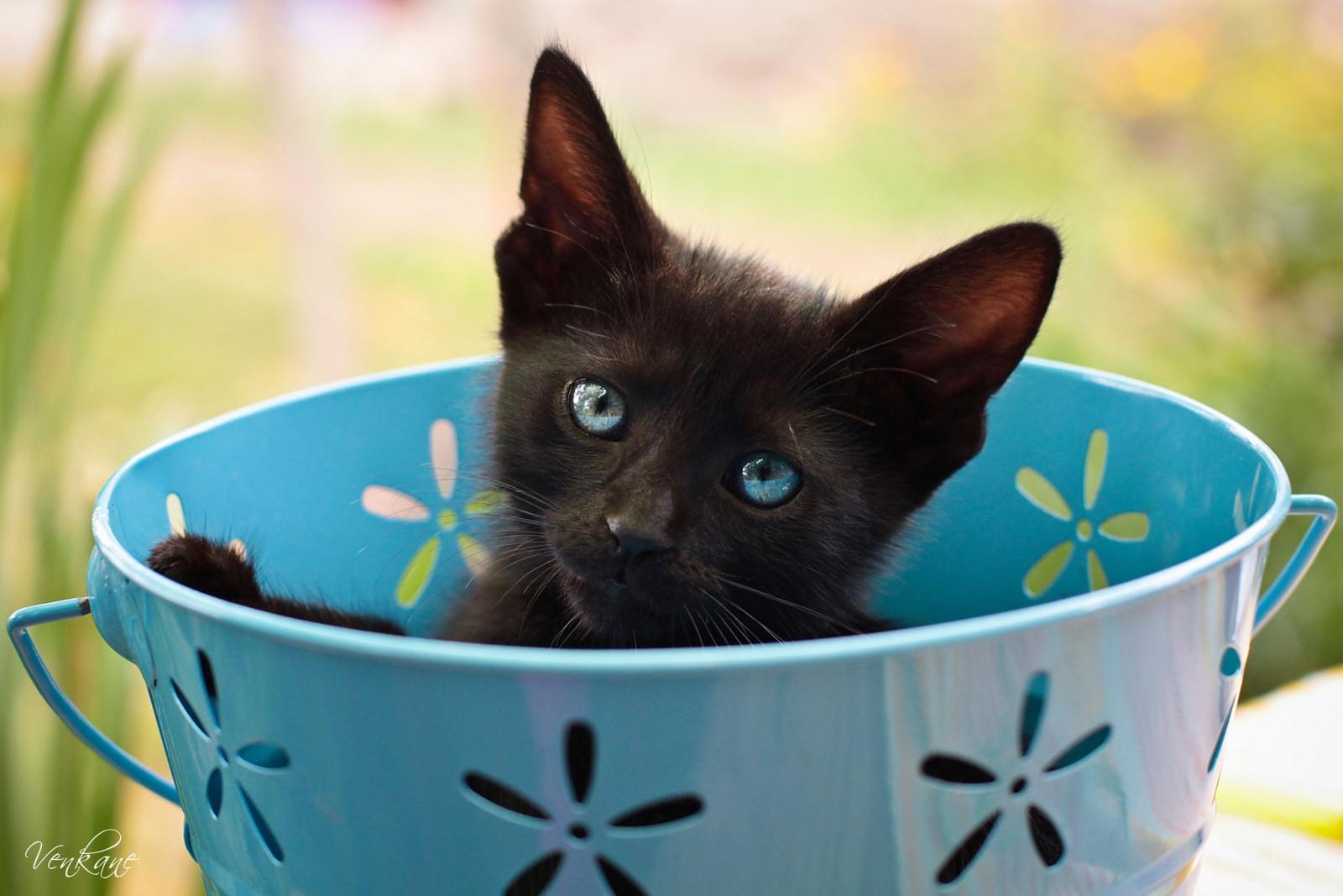 Ведро котят фото