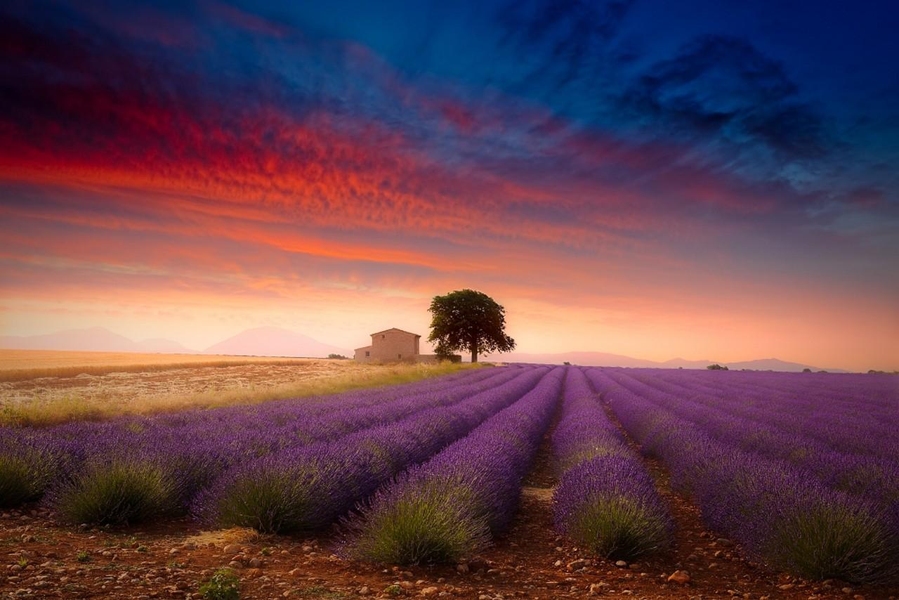 Wallpaper : sunlight, trees, landscape, sunset, flowers, nature, sky
