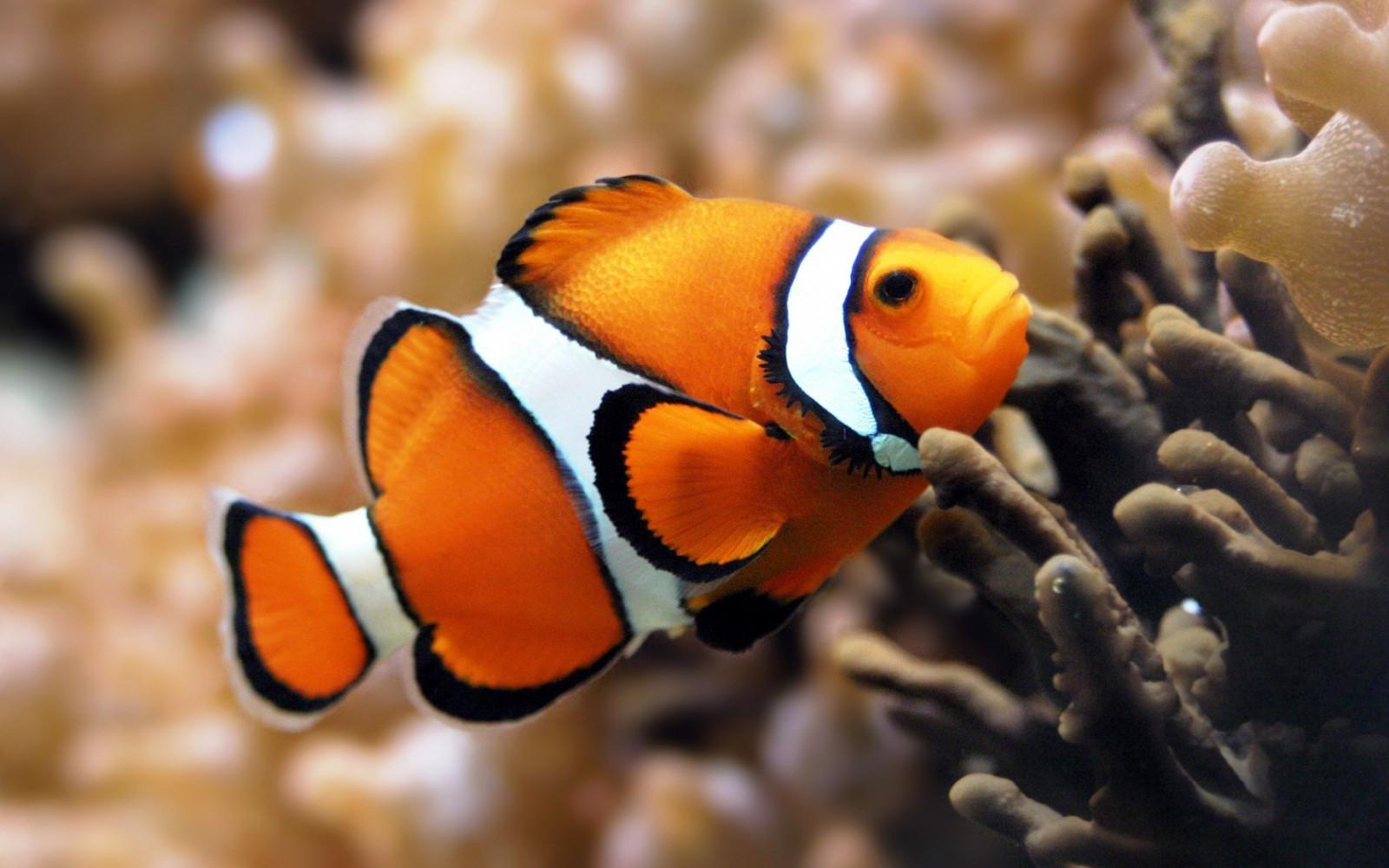 Clownfish - скачать на русском для скайпа (клоунфиш) для изменения 5