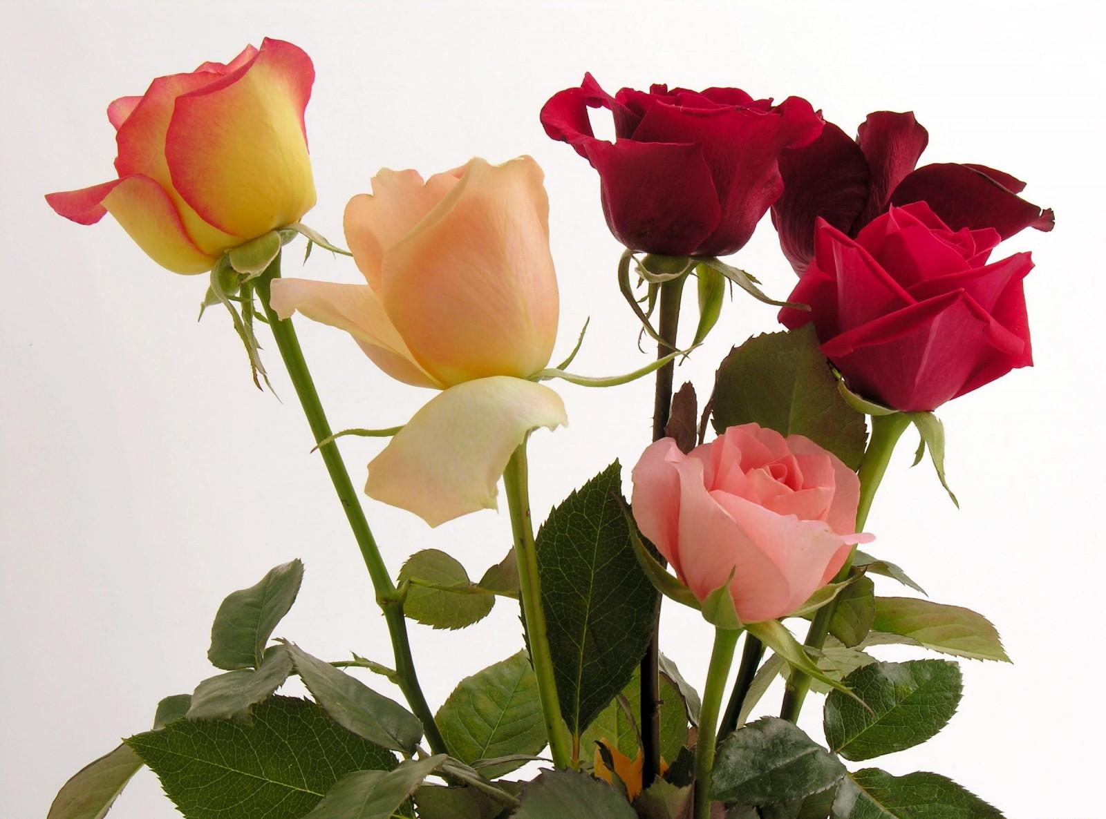 Розы фото цветов открытки, фетром день