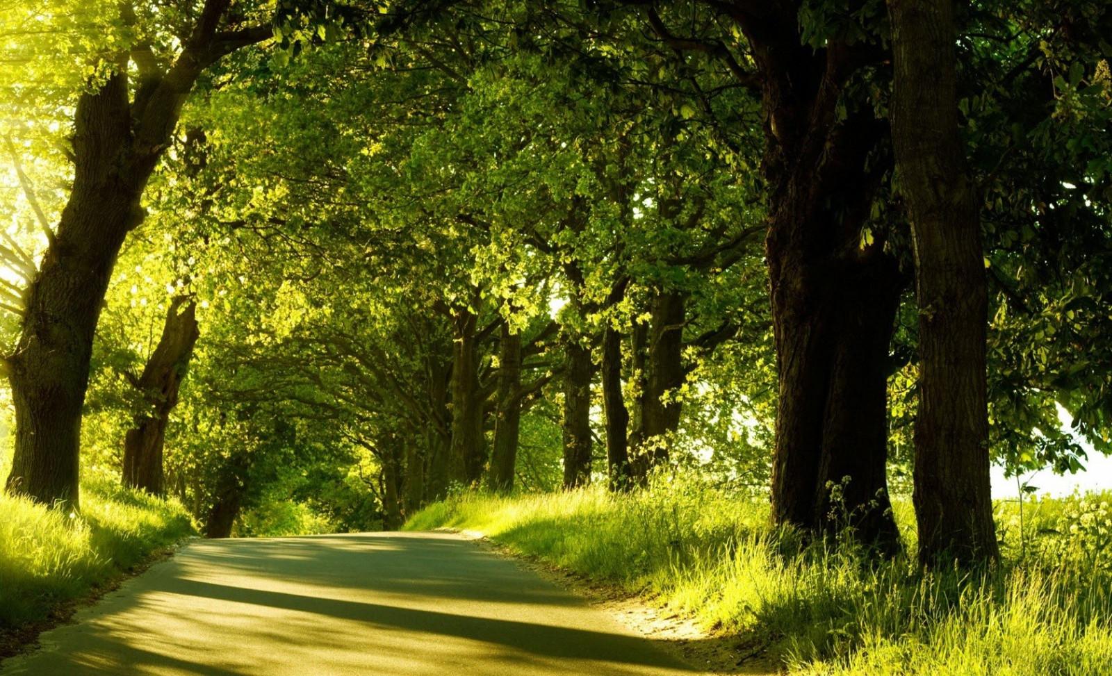 hintergrundbilder sonnenlicht b ume landschaft wald natur gras park pflanzen stra e. Black Bedroom Furniture Sets. Home Design Ideas