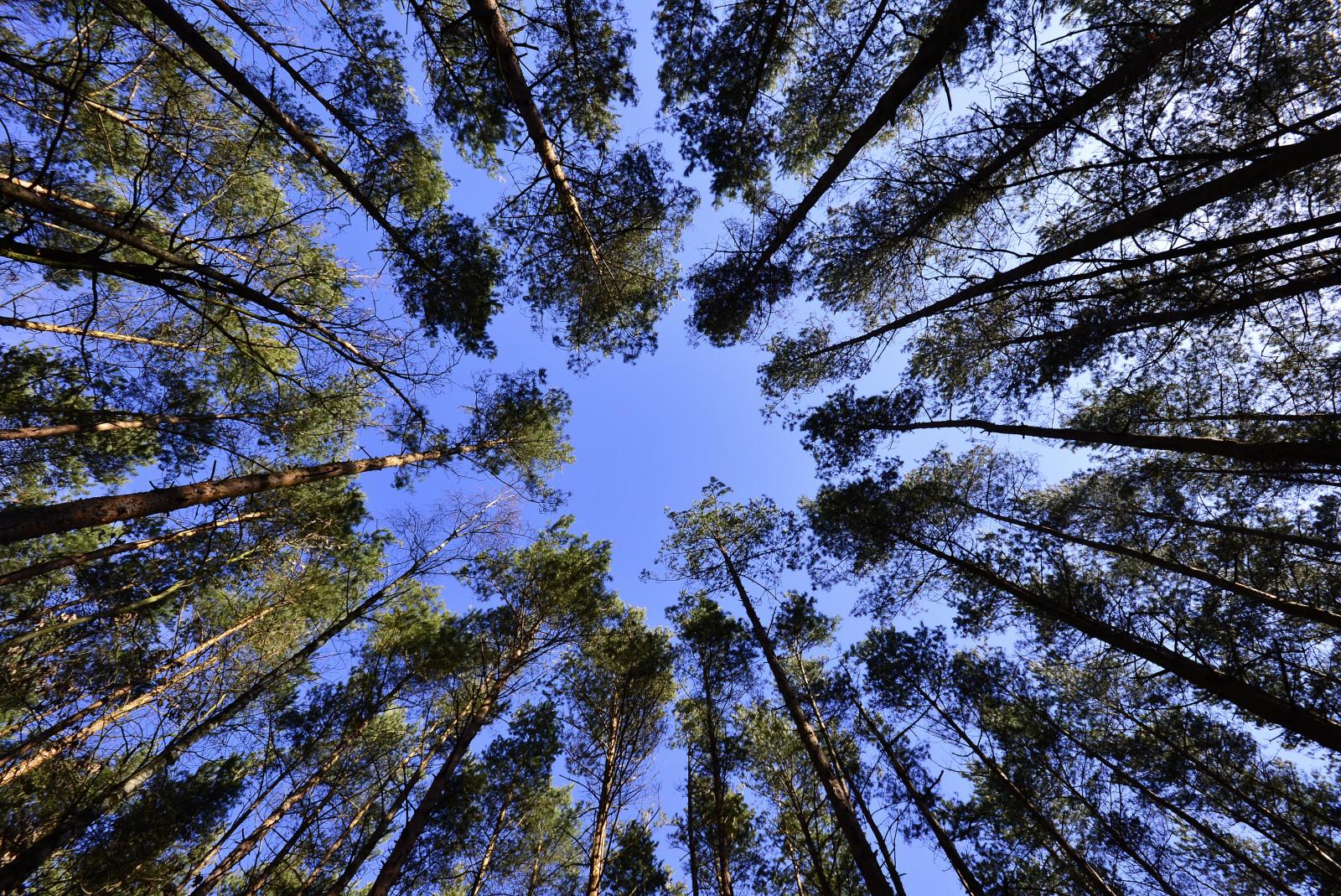 Возобновление леса схема