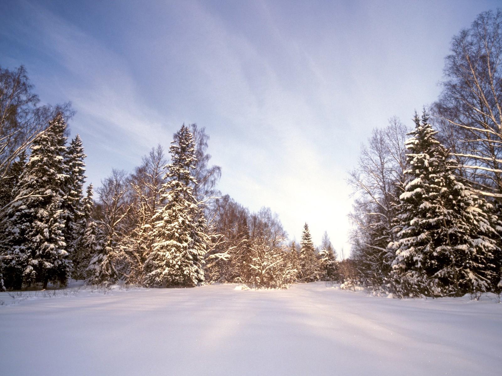 ради картинка зимней лесной поляны вокруг