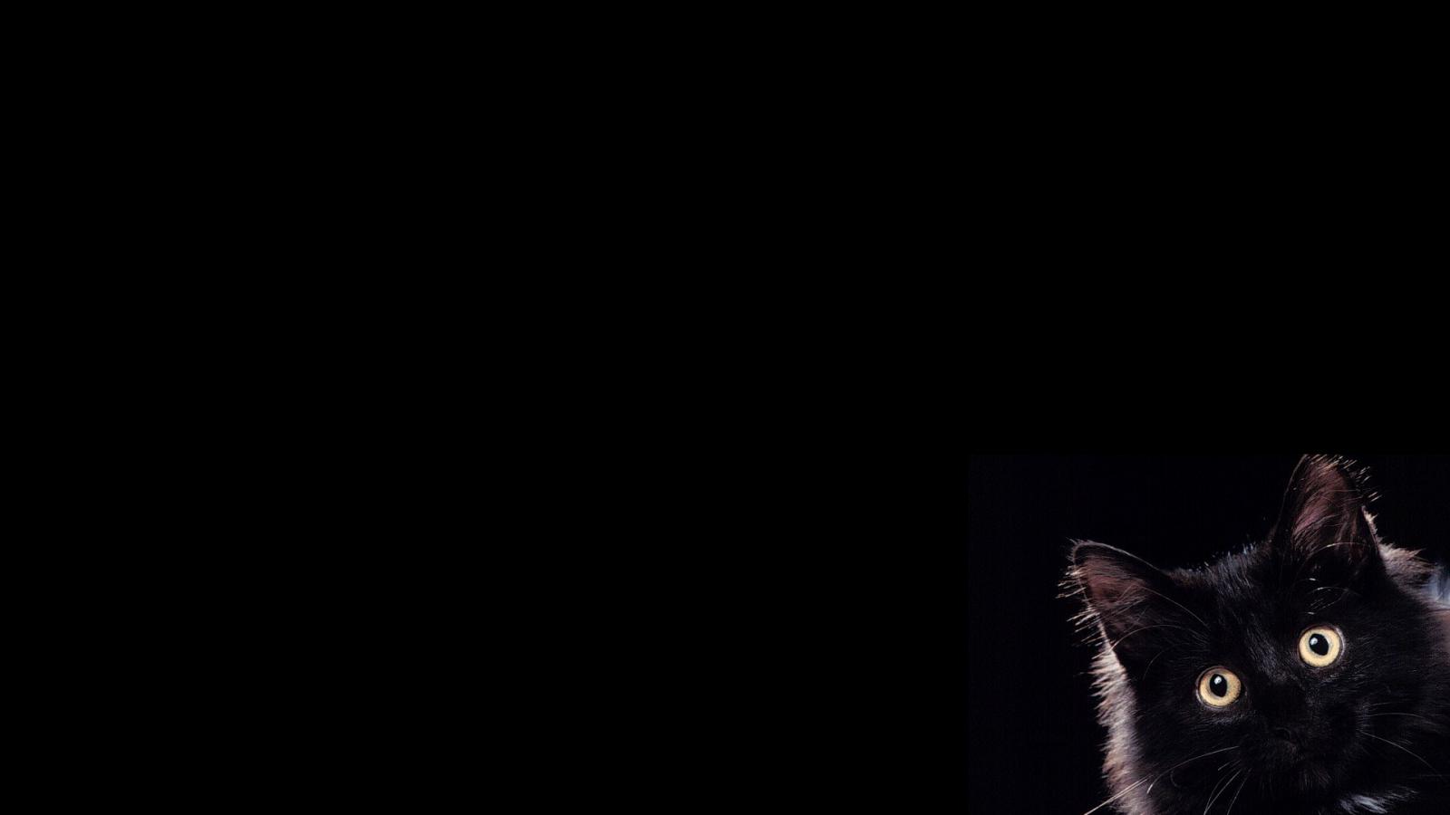 обои на рабочий стол черные кошки на черном фоне № 154912 загрузить