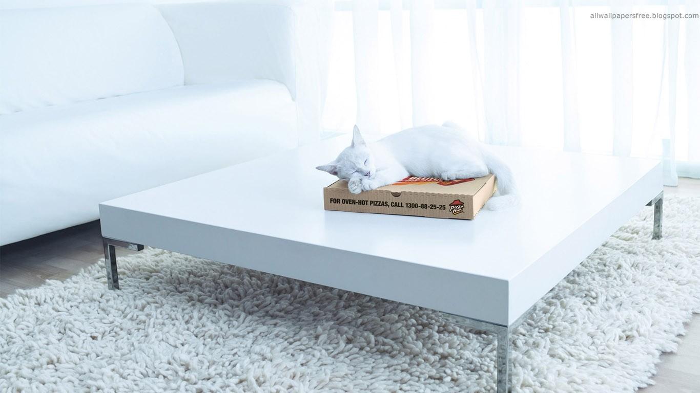 Hintergrundbilder : Katze, Tiere, Zimmer, Bett, Kunstwerk, Tabelle ...