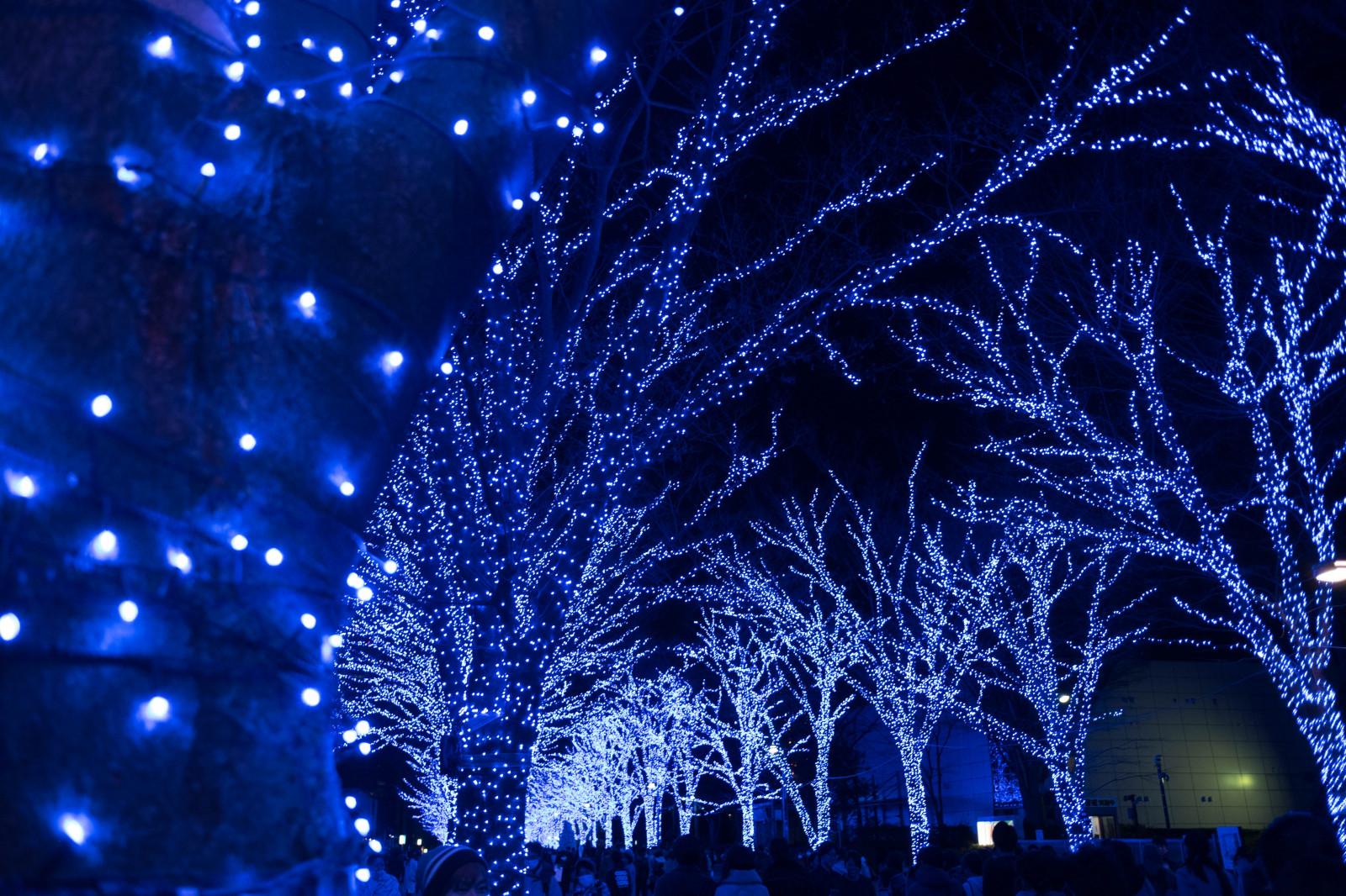 Led Blue Christmas Lights