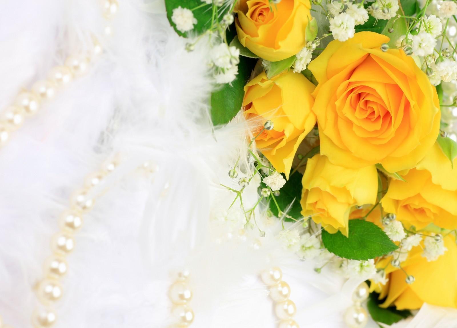 Imagini De Fundal Galben Bijuterii Perle Floare Plantă