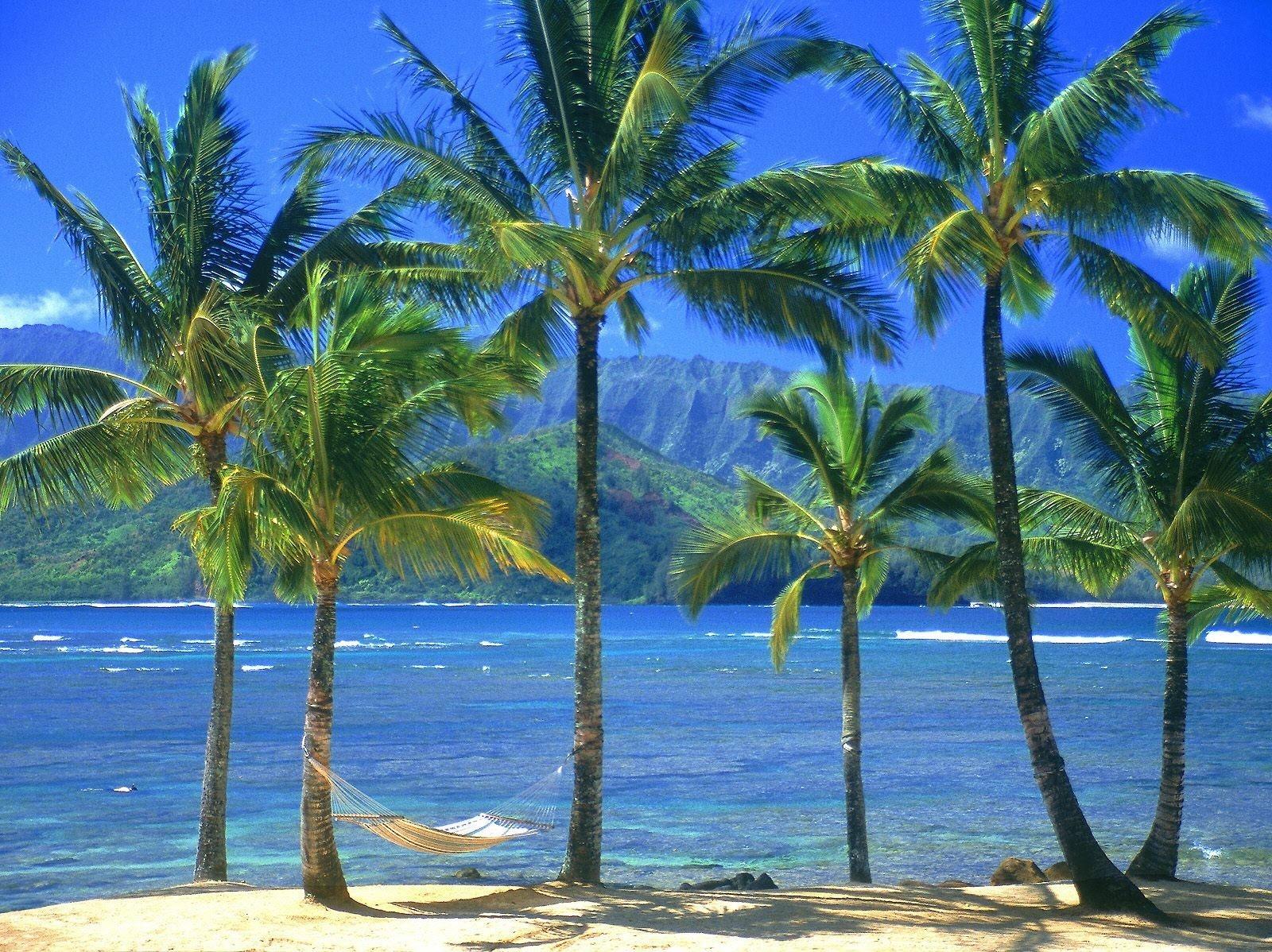 Fond d'écran : hamac, palmiers, côte, plage, mer 1600x1198 ...