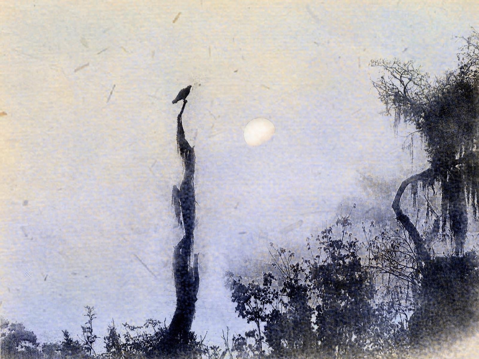 Wallpaper Gambar Lukisan Burung Burung Matahari Terbit