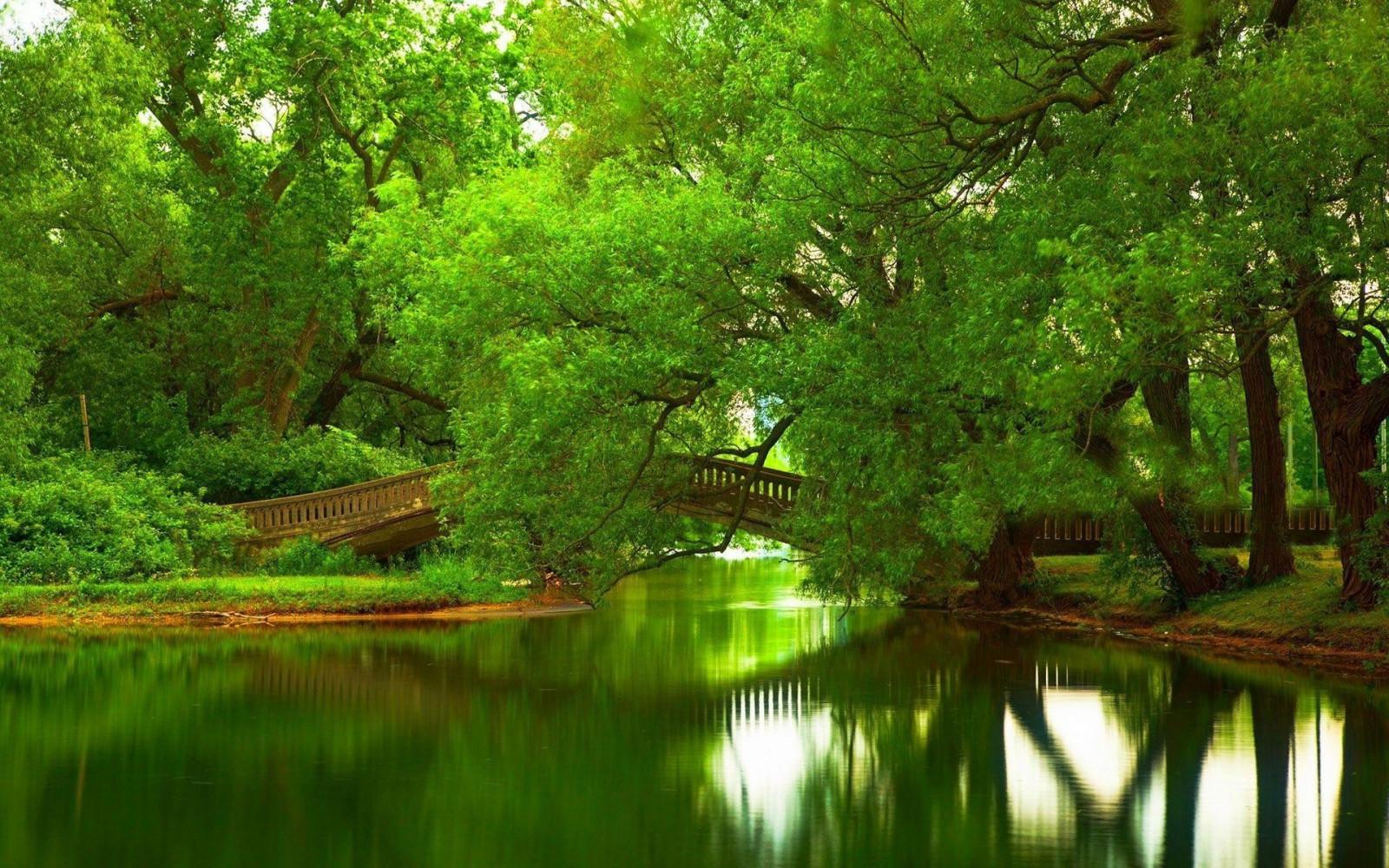 Wallpaper Trees Garden Nature Reflection Green