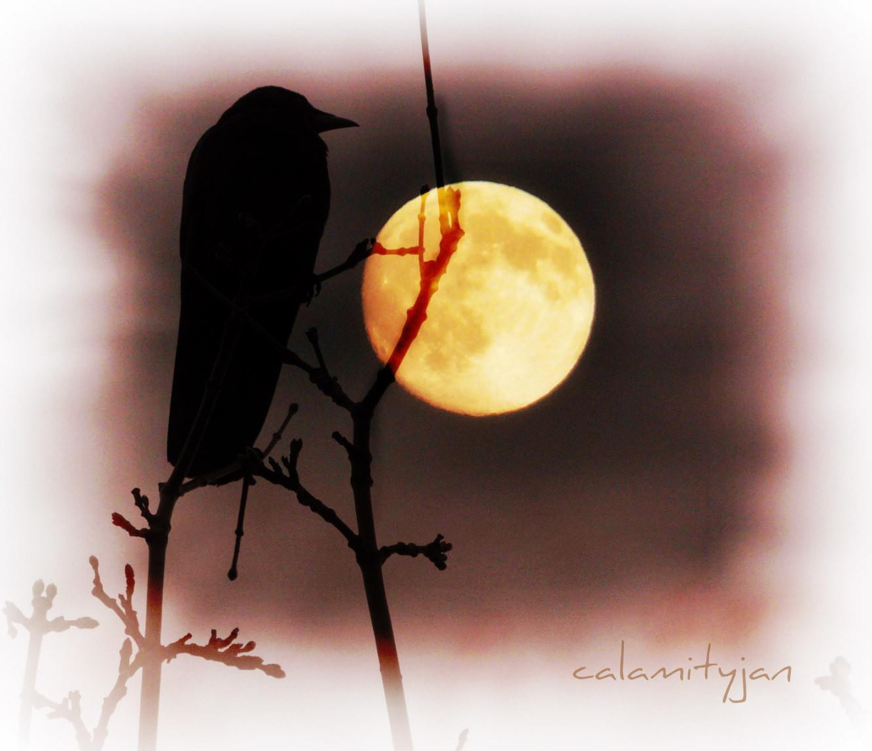 автофокус картинка ворон на фоне луны вкусу аромату зелень