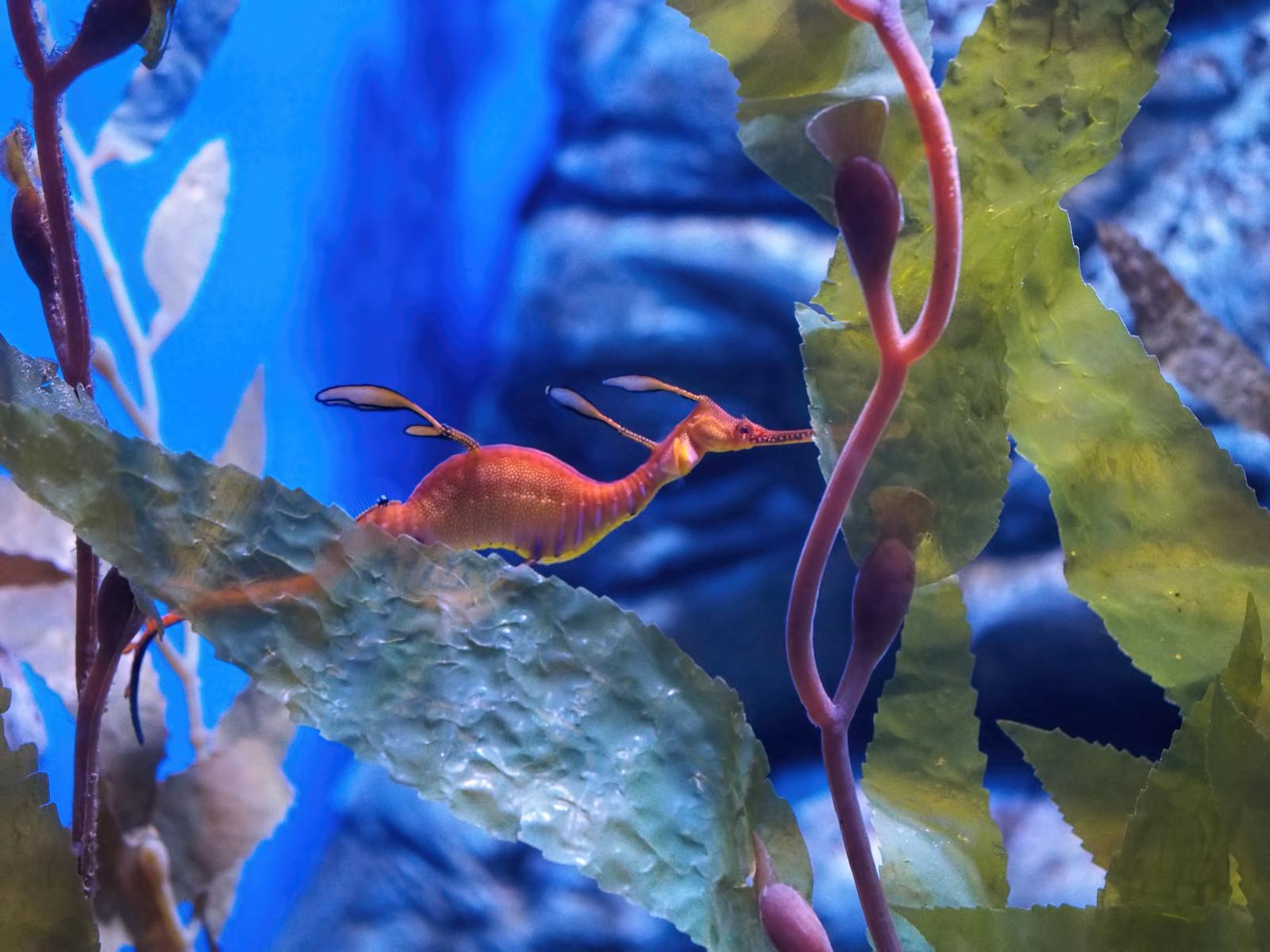 fond d 39 cran eau poisson sous marin aquarium australie perth arbre feuille plante. Black Bedroom Furniture Sets. Home Design Ideas