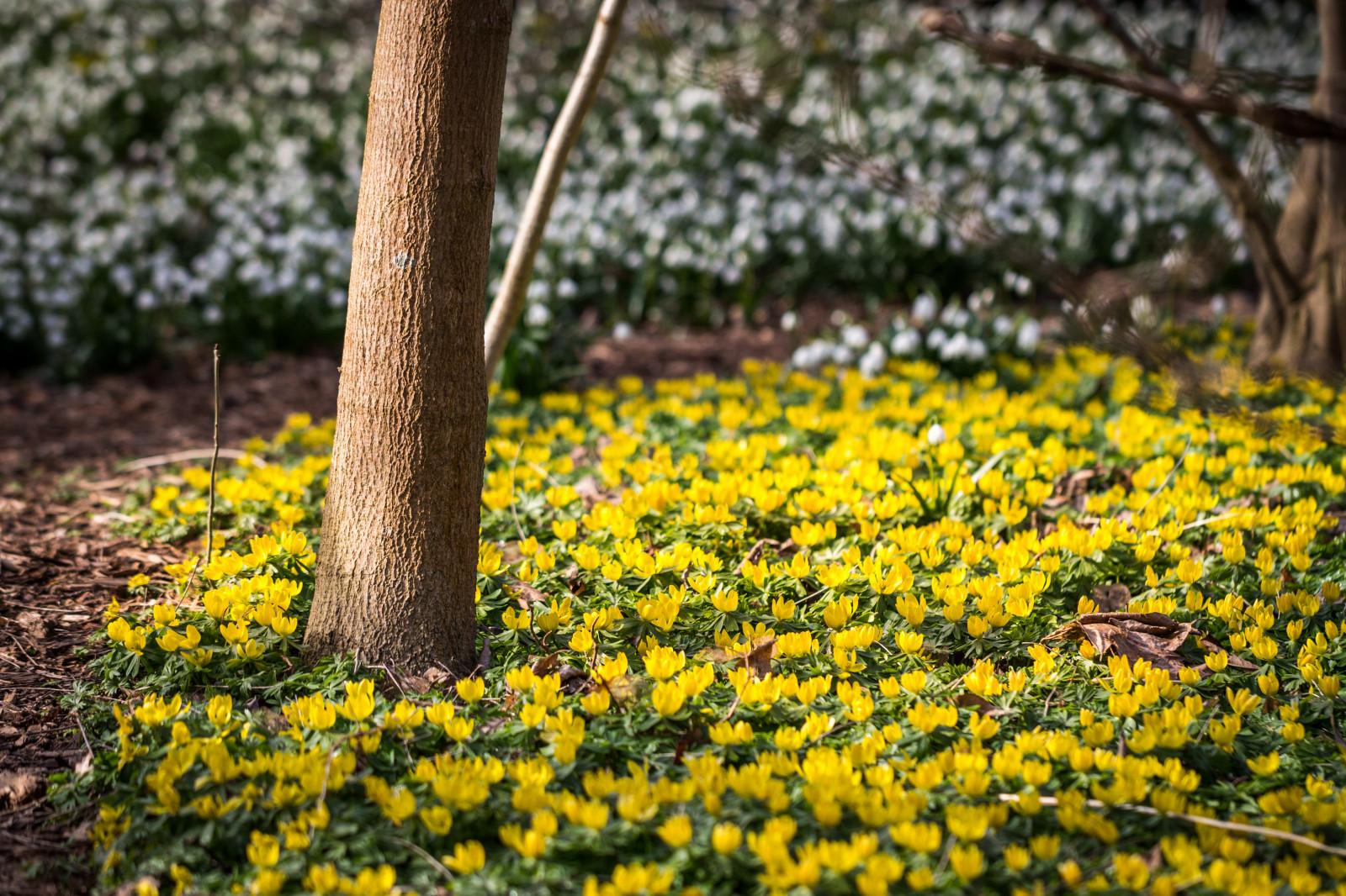 Hintergrundbilder : Landschaft, Weiß, Blumen, Garten, Natur, Gras ...