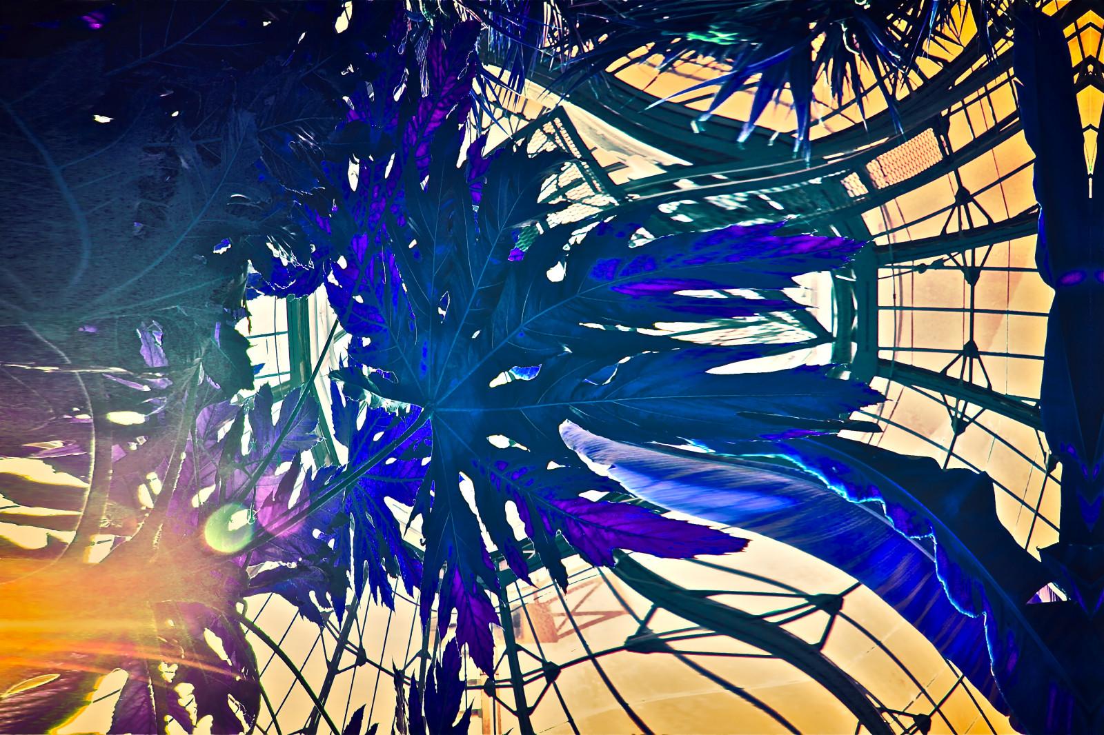 Fondos de pantalla : hojas, ilustración, espacio, púrpura, diseño ...