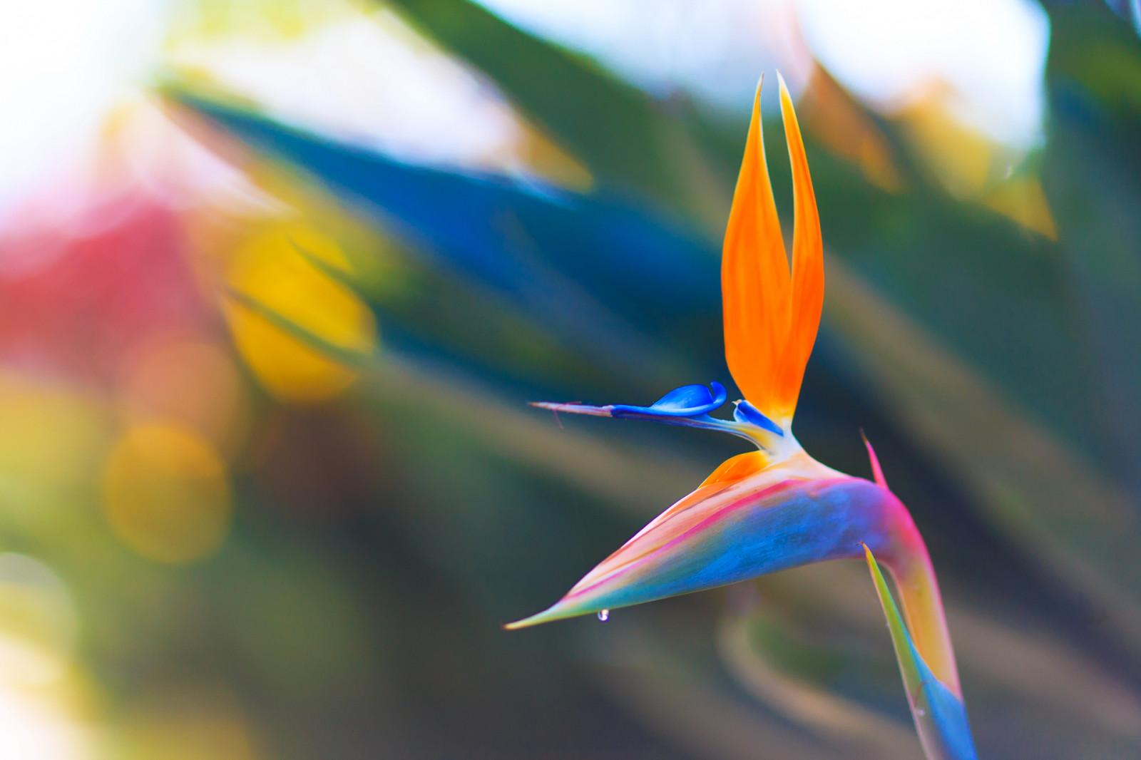 Fond d'écran : fleurs, tester, Orange, les plantes, plante, fleur, Couleur, vert, la nature, eau ...