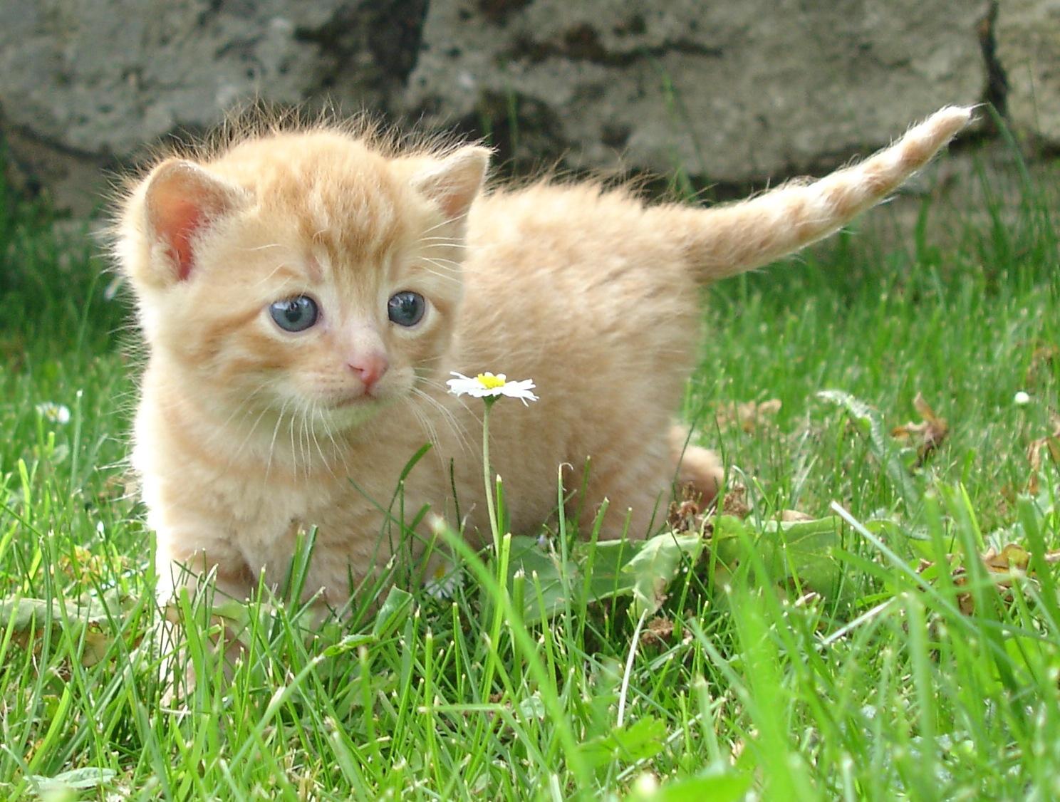 jouet chat suisse