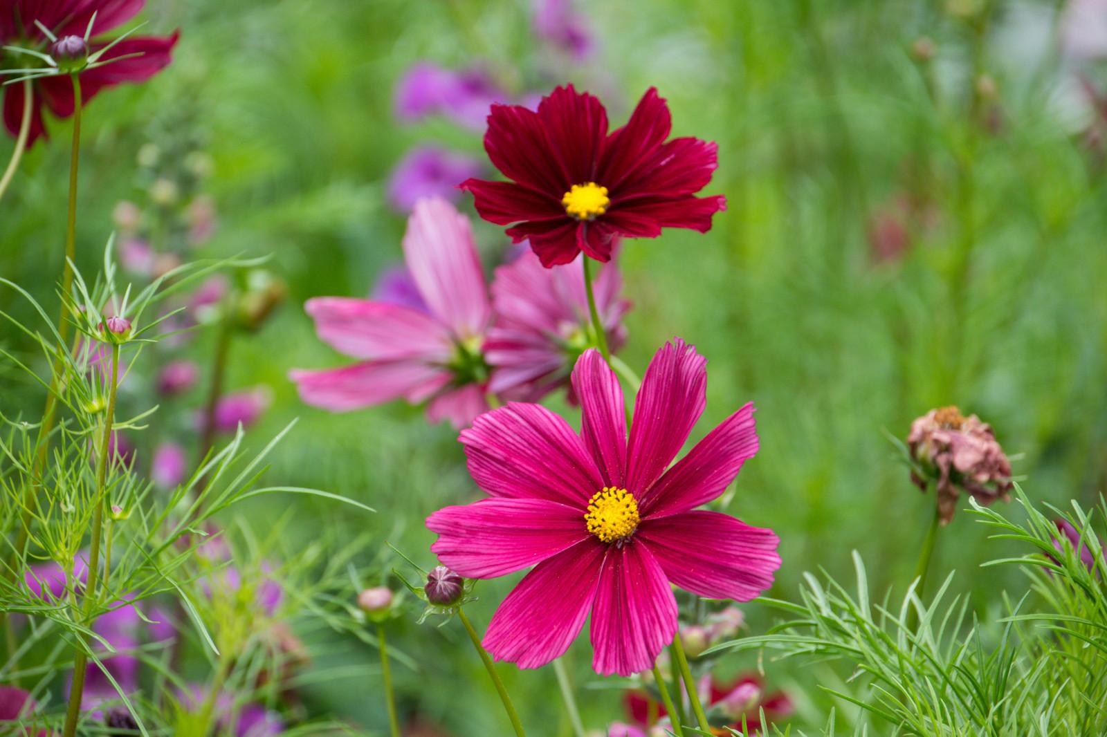 Fond d 39 cran jardin champ t sverige couleur for Catalogue fleurs de jardin
