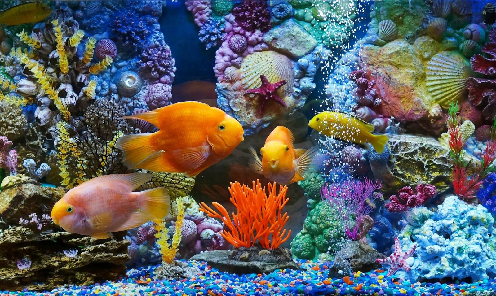 fond d 39 cran poisson sous marin r cif de corail aquarium la biologie faune habitat. Black Bedroom Furniture Sets. Home Design Ideas