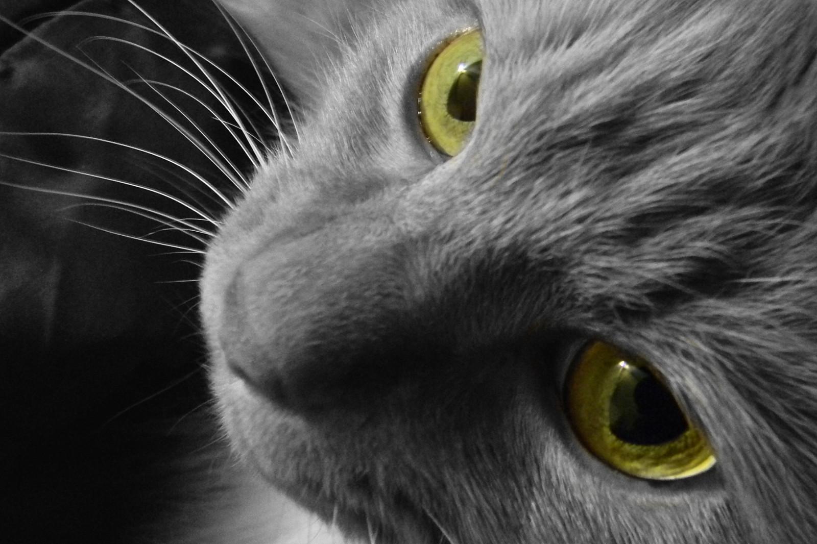 wallpaper eyes yellow hair nose whiskers georgia black cat blackandwhite 50mm animal. Black Bedroom Furniture Sets. Home Design Ideas