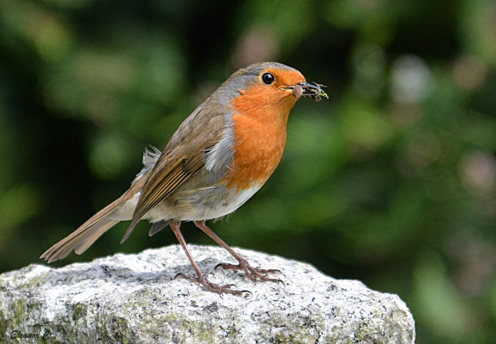 певчие птицы ставрополья фото давно