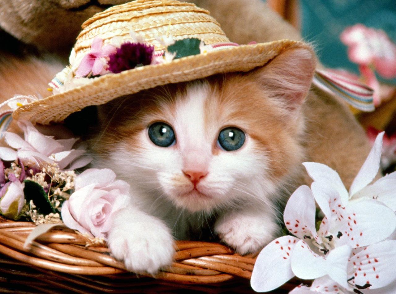 Sfondi gattini barba gattino gatto come mammifero - Lettere stampabili di medie dimensioni ...