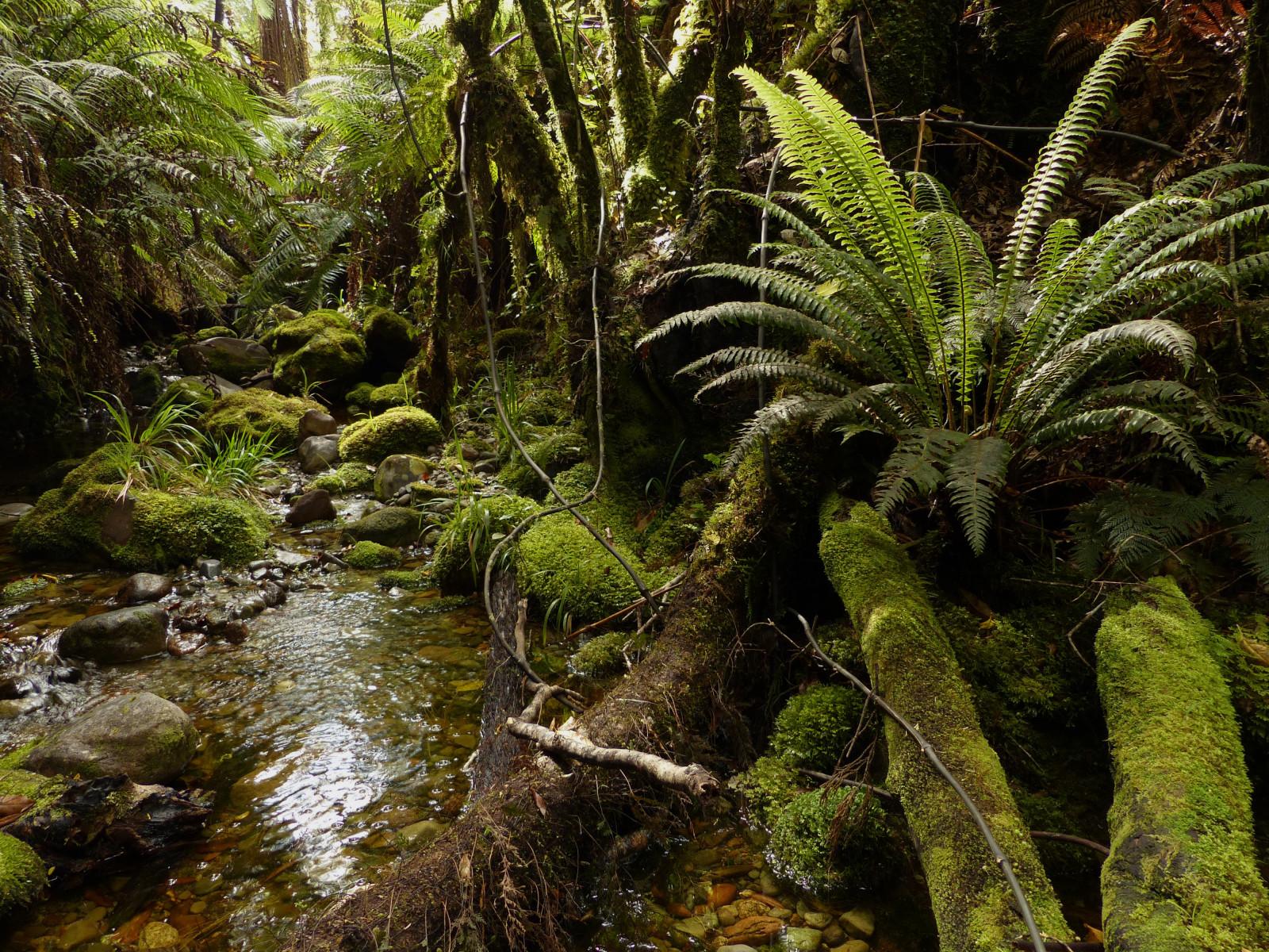 Wallpaper Landscape Photography Moss Green Rocks