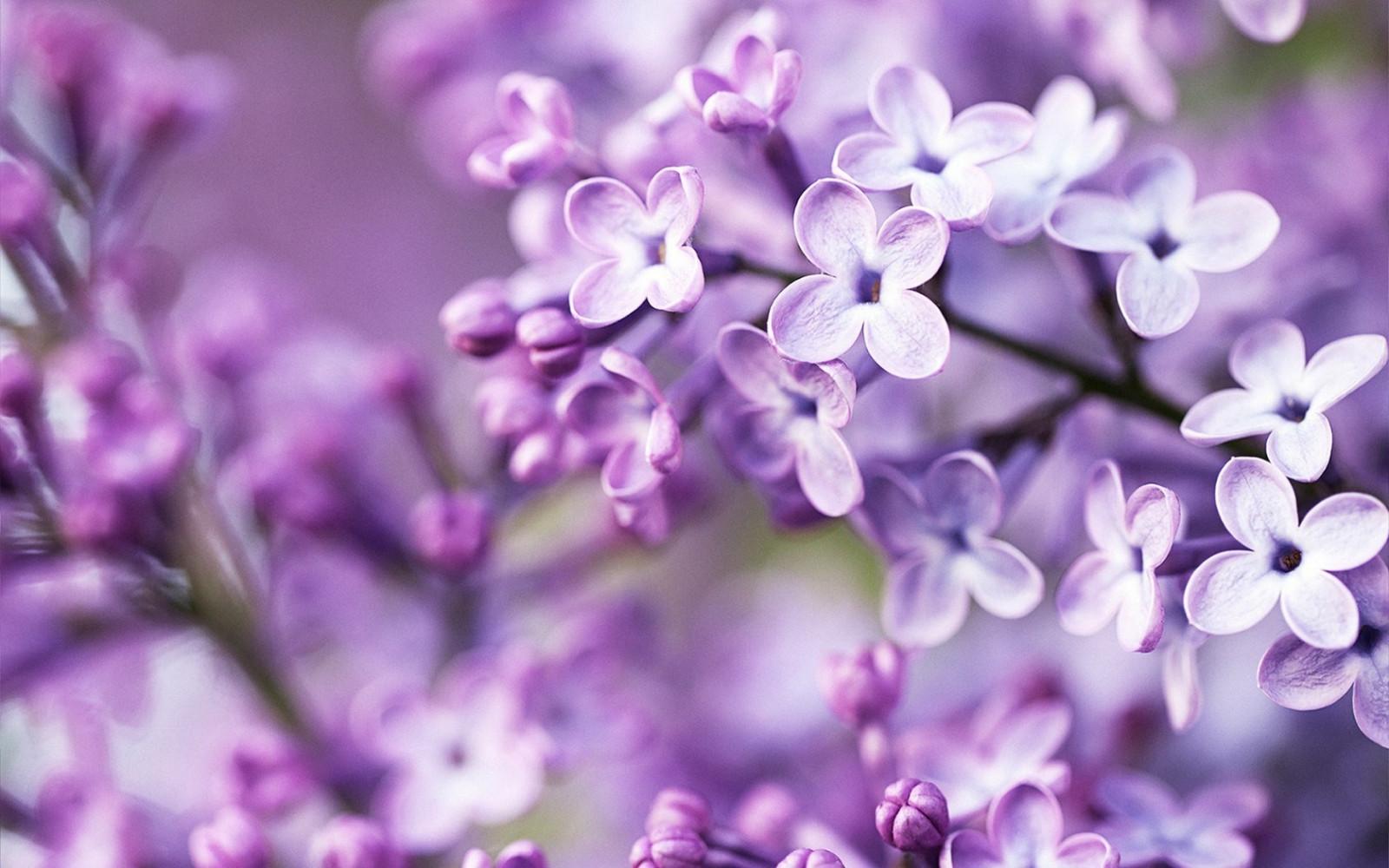 Fotos de flores para salvapantallas 89