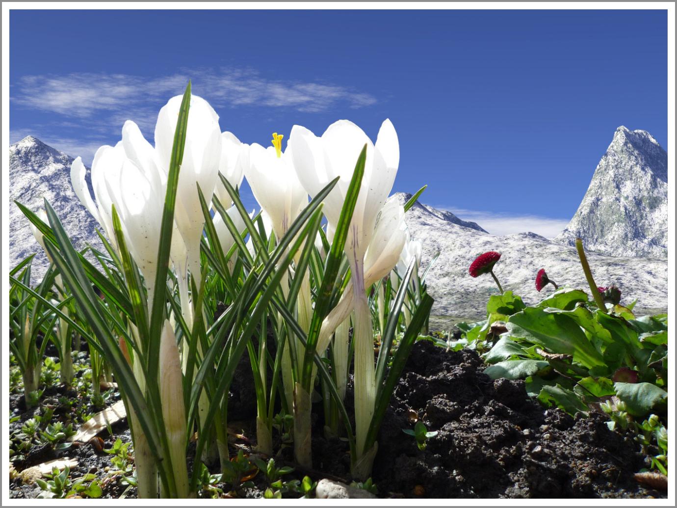 Wallpaper Flowers Blue Sky White Mountains Flower Spring