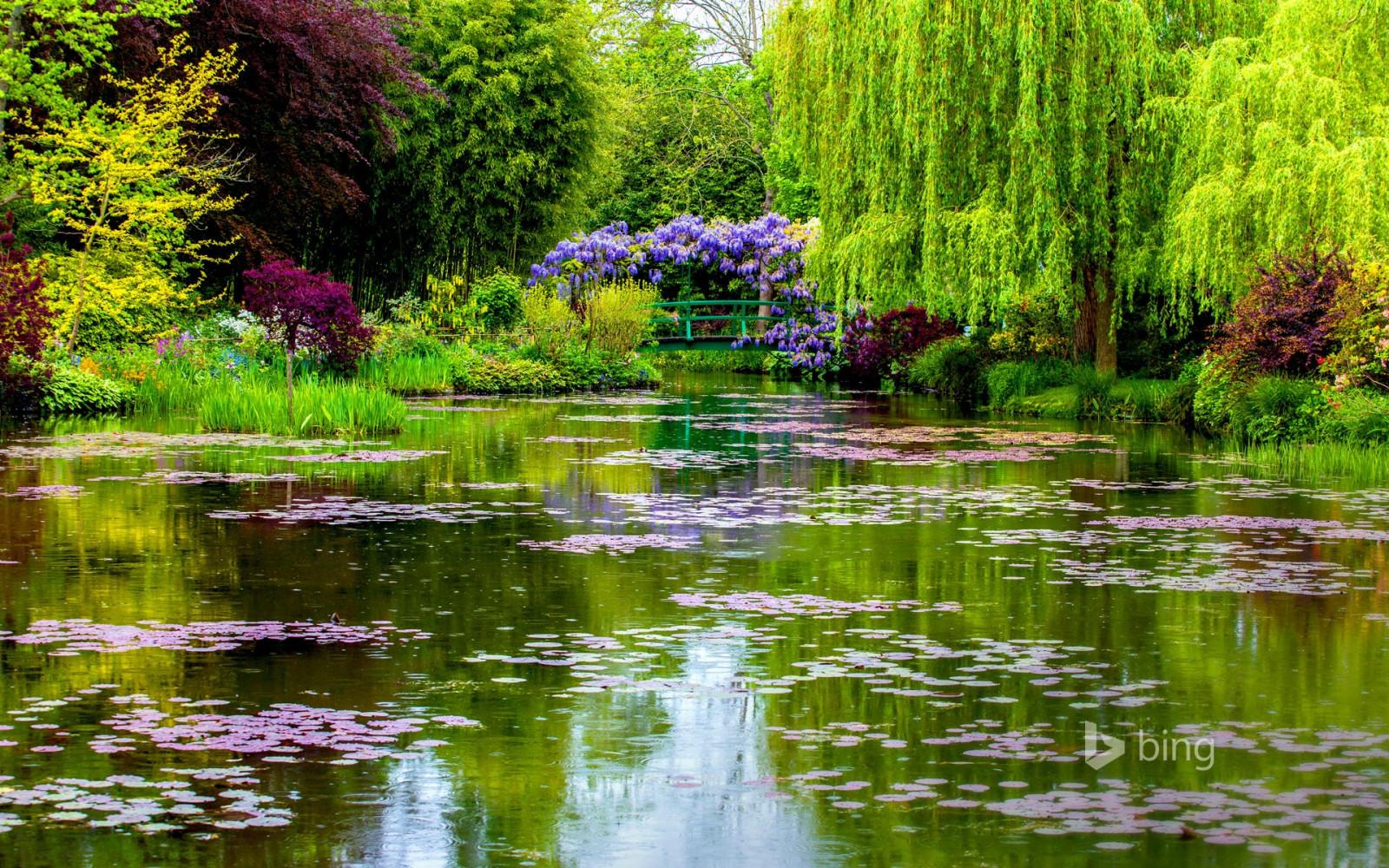 Resultado de imagem para agua corrente com plantas