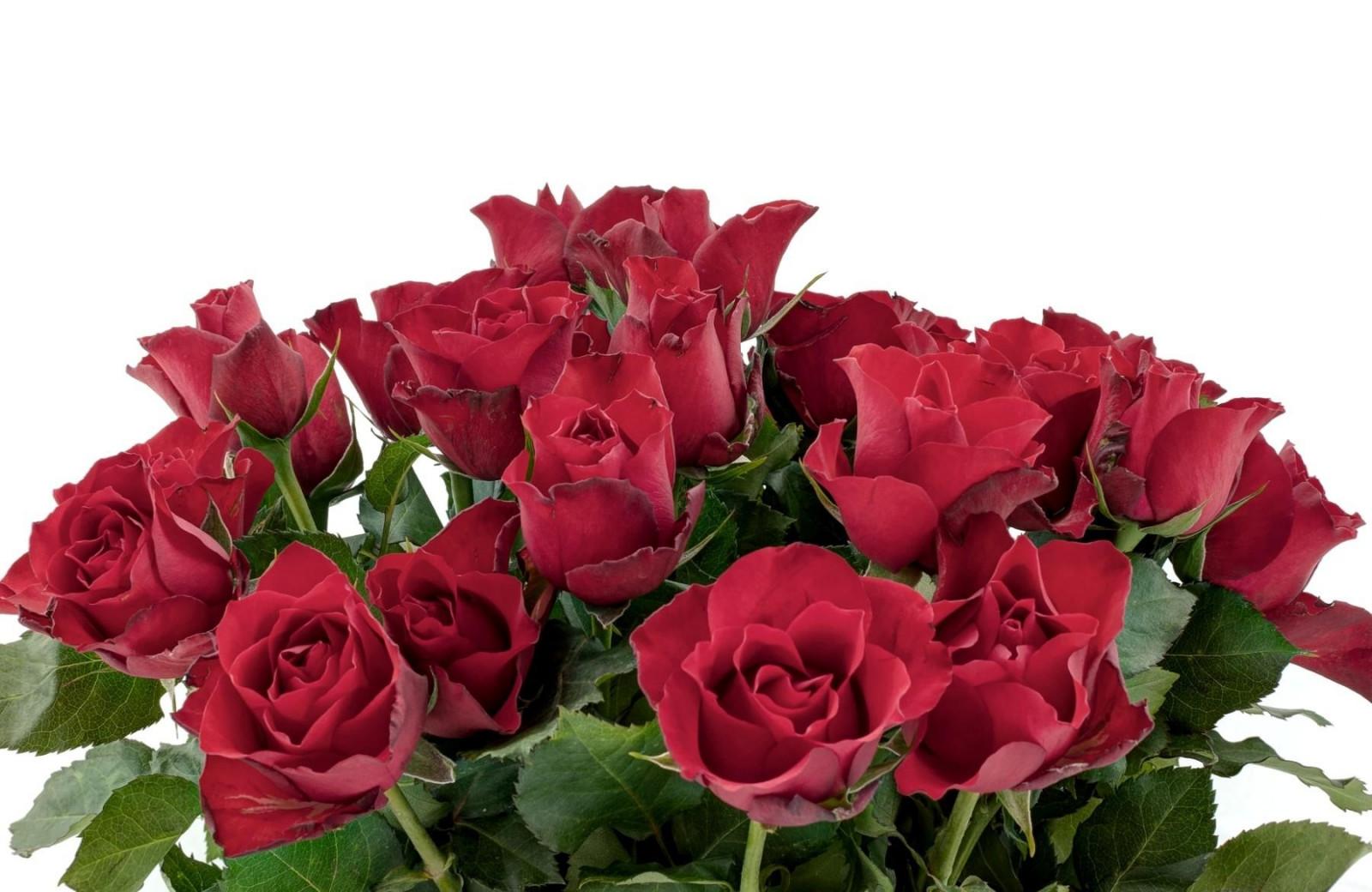 Приколы тетрадь, открытка с розами на белом фоне