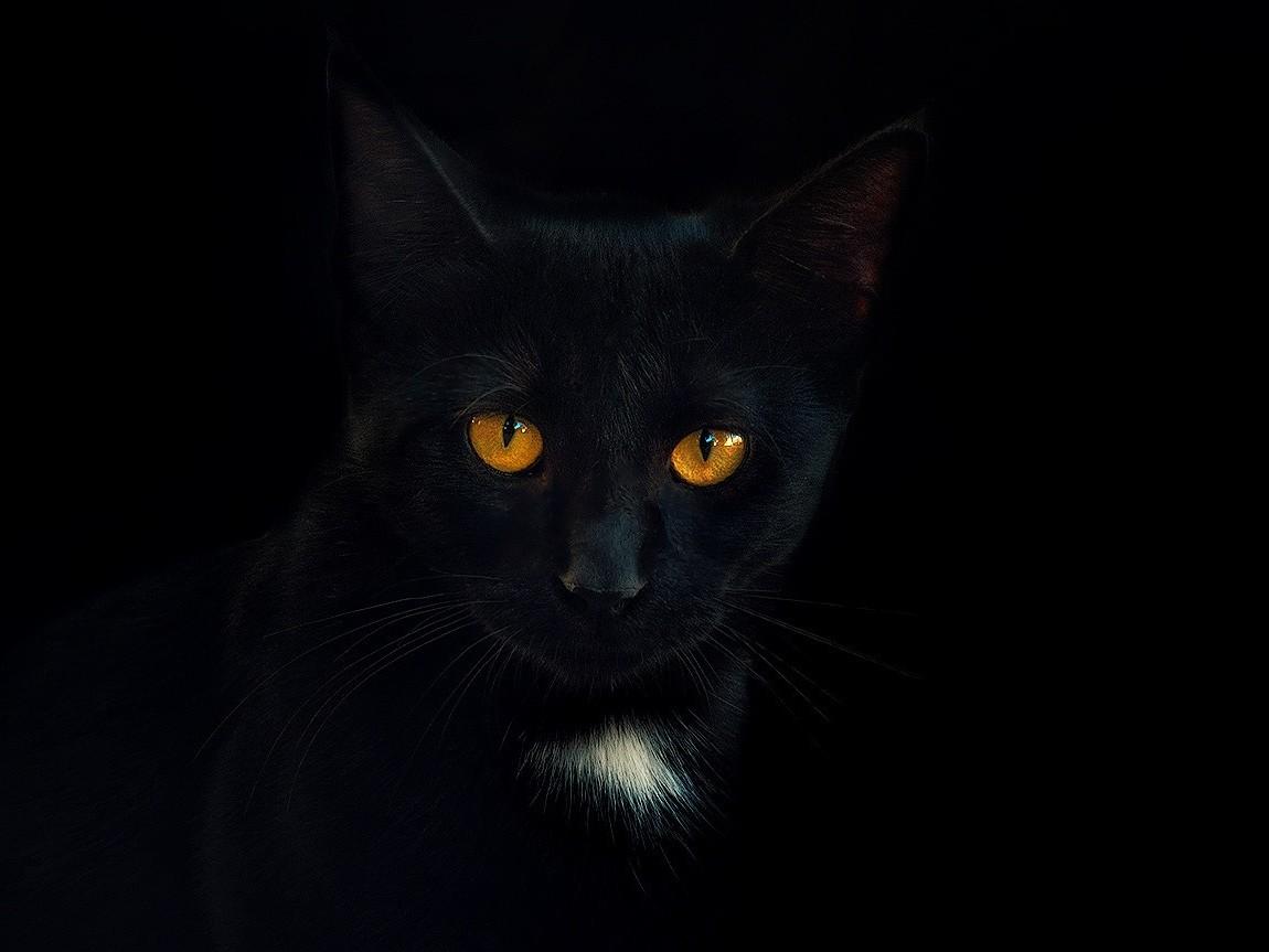 černá kočička do prdele