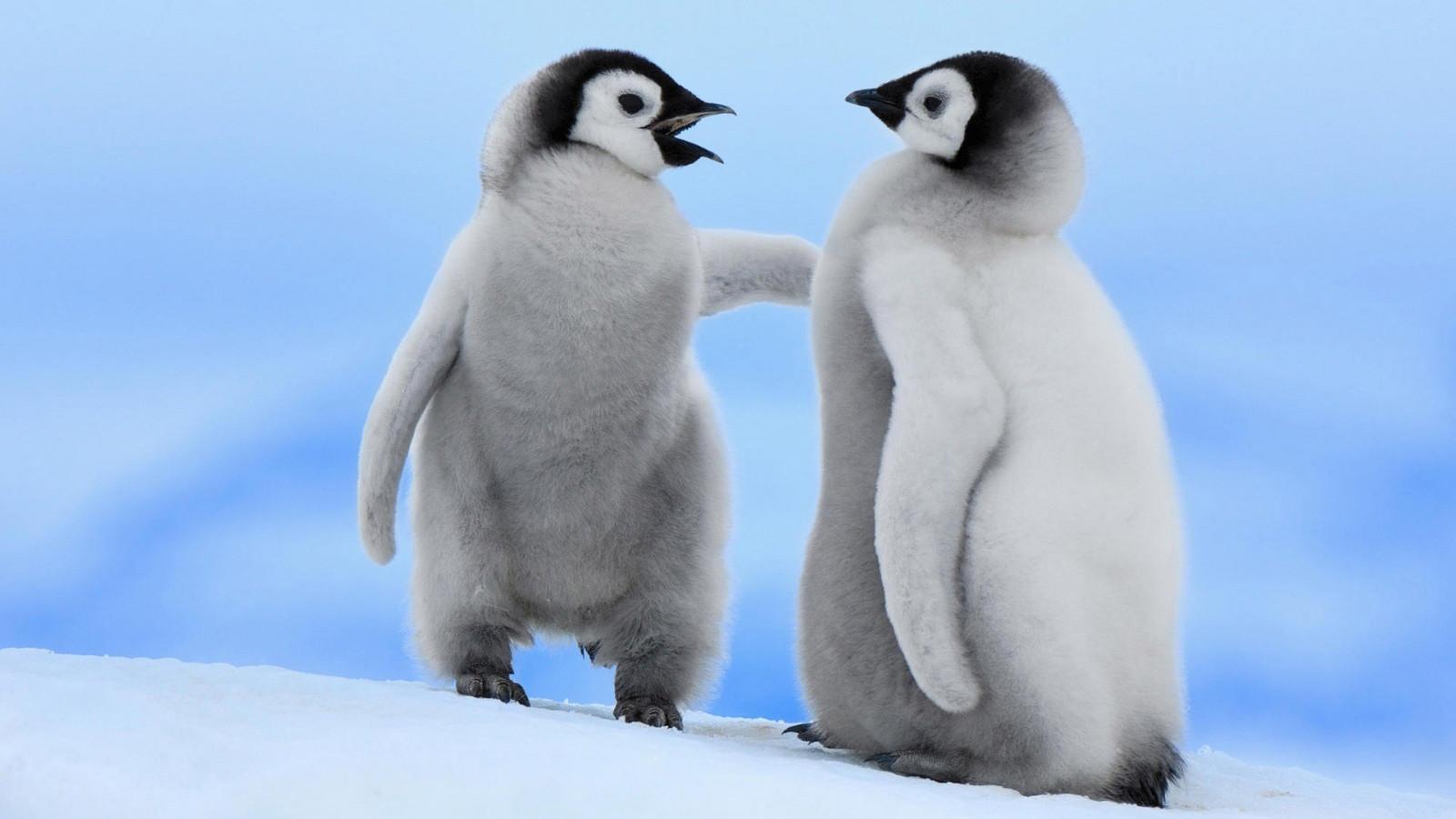 Fotos concentracion pinguinos 2012 96