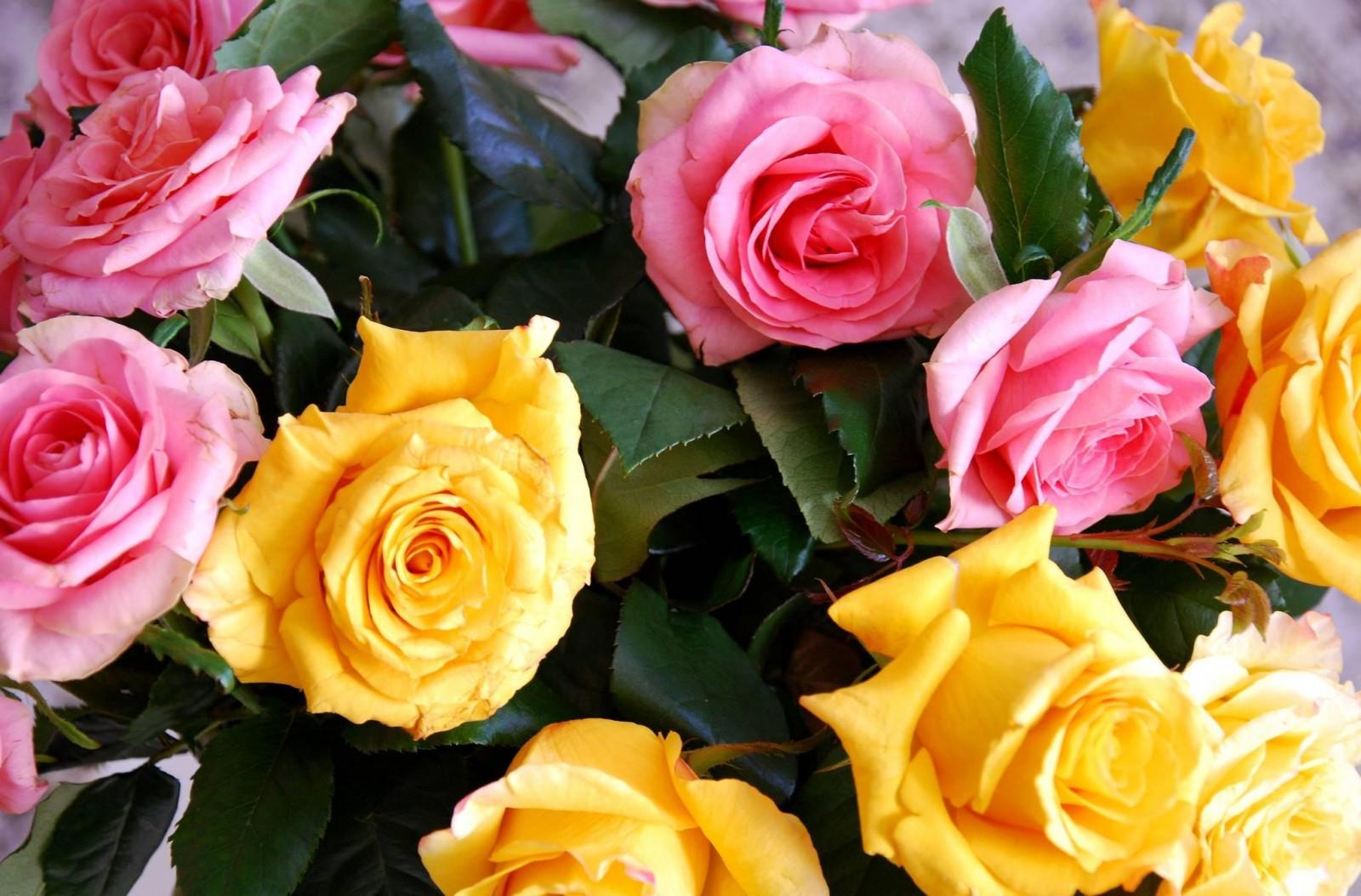 картинки роз по почте антикварном магазине печать