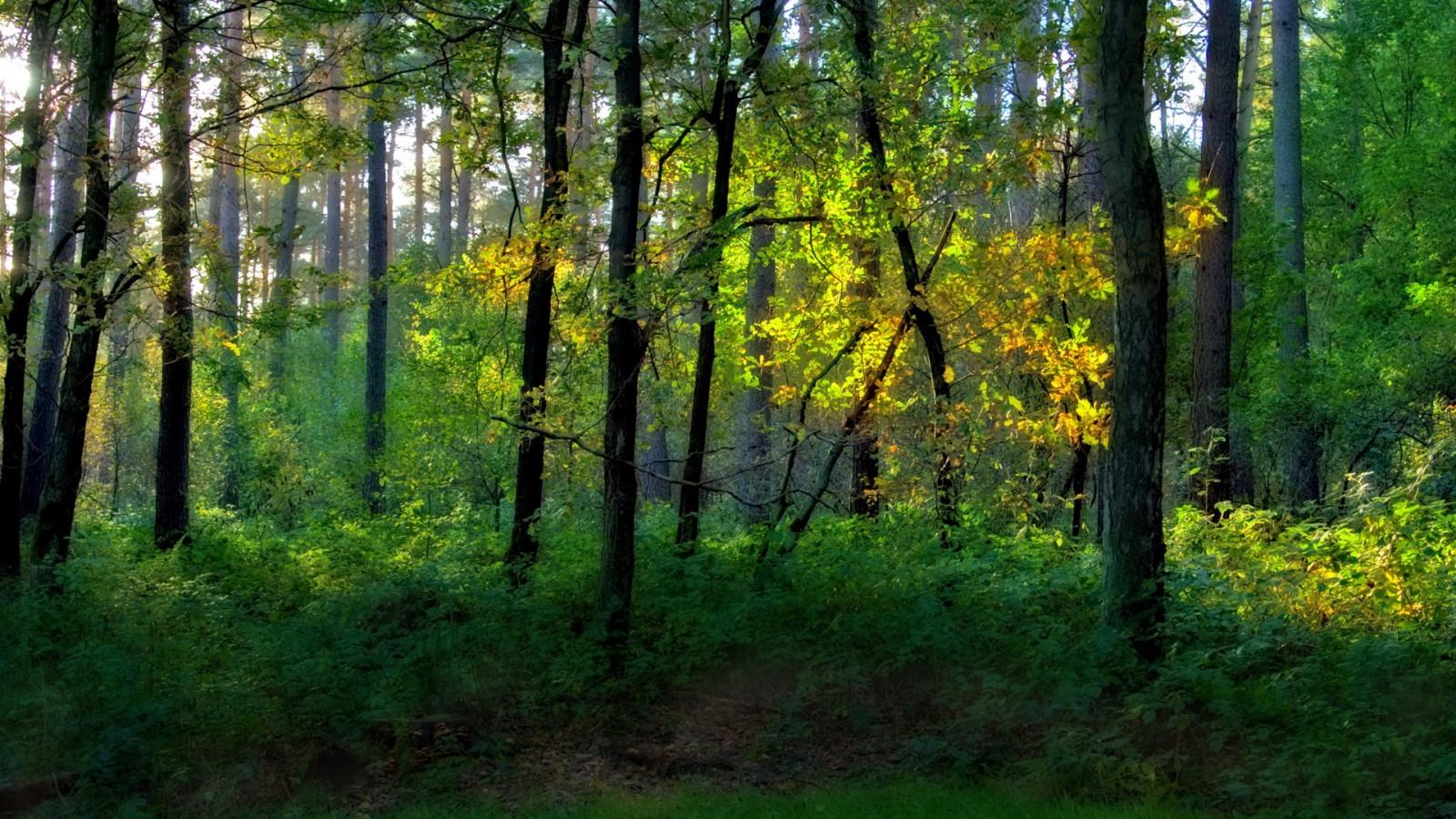 Güneş ışığı Ağaçlar Manzara orman doğa Ot ahşap orman yağmur ormanı Doğa rezervi Ağaç sonbahar Yaprak bitki örtüsü Ormanlık alan Koruluk ekosistem Ilıman iğne yapraklı orman Biyom Bagaj Eski büyüme ormanı Ilıman geniş yapraklı ve karışık orman yaprak döken Çalılar yeşillik Kıyısal orman spruce fir forest northern hardwood forest concept tropical and subtropical coniferous forests valdivian temperate rain forest