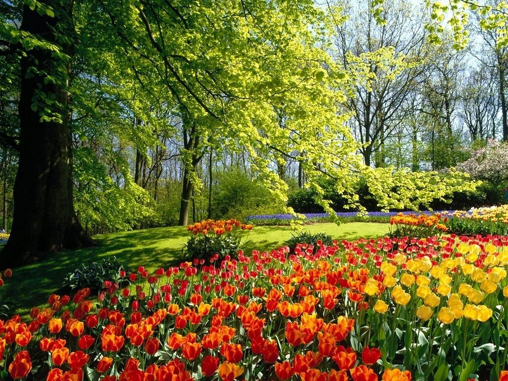 Цветы и деревья