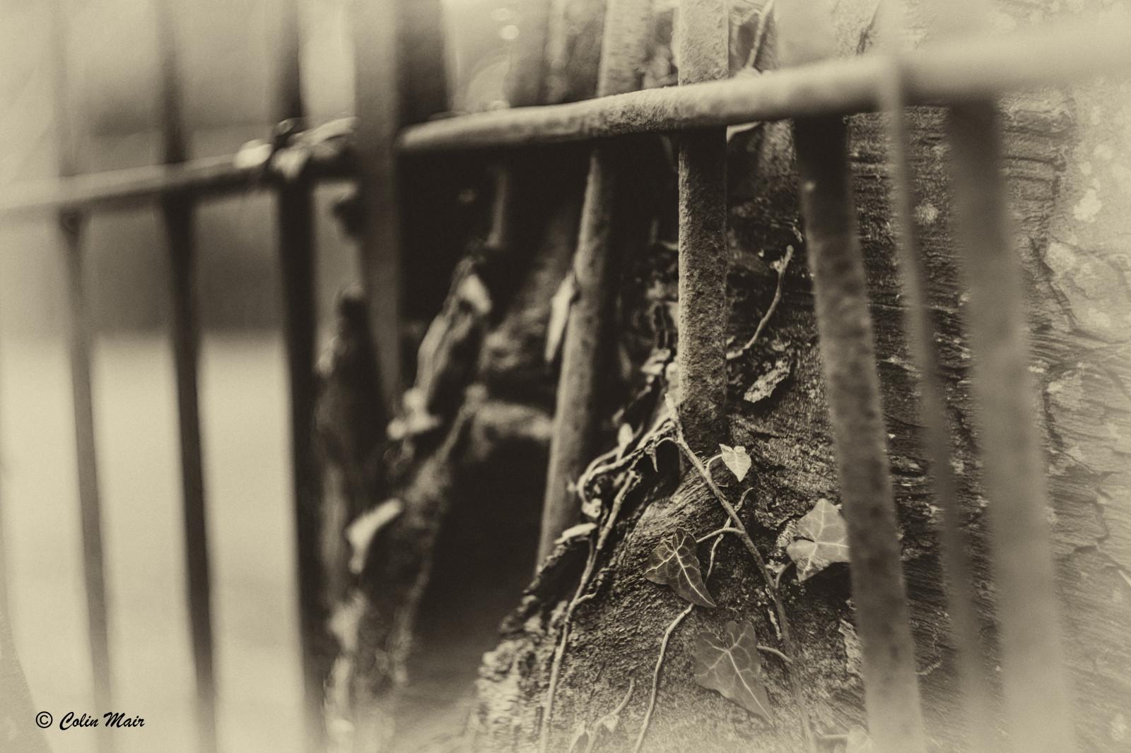 Wallpaper : old, Sony, fence, lens, Russian, USSR, tree, bw