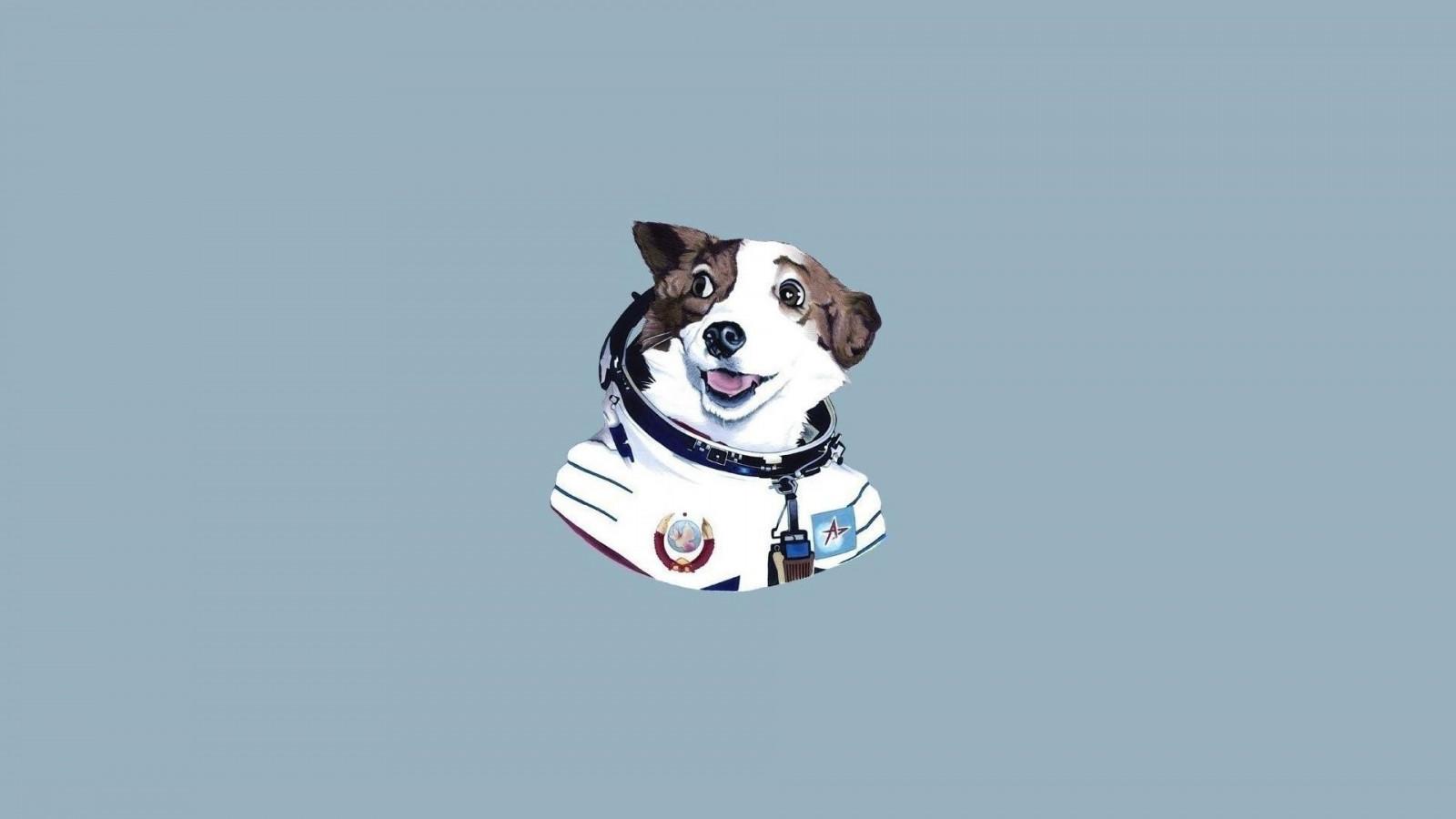 7400 Gambar Kartun Binatang Anjing Terbaik
