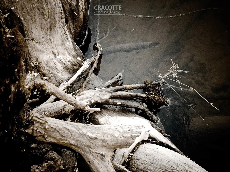 Fond d\'écran : horreur, eau, le sable, branche, rivière, France ...