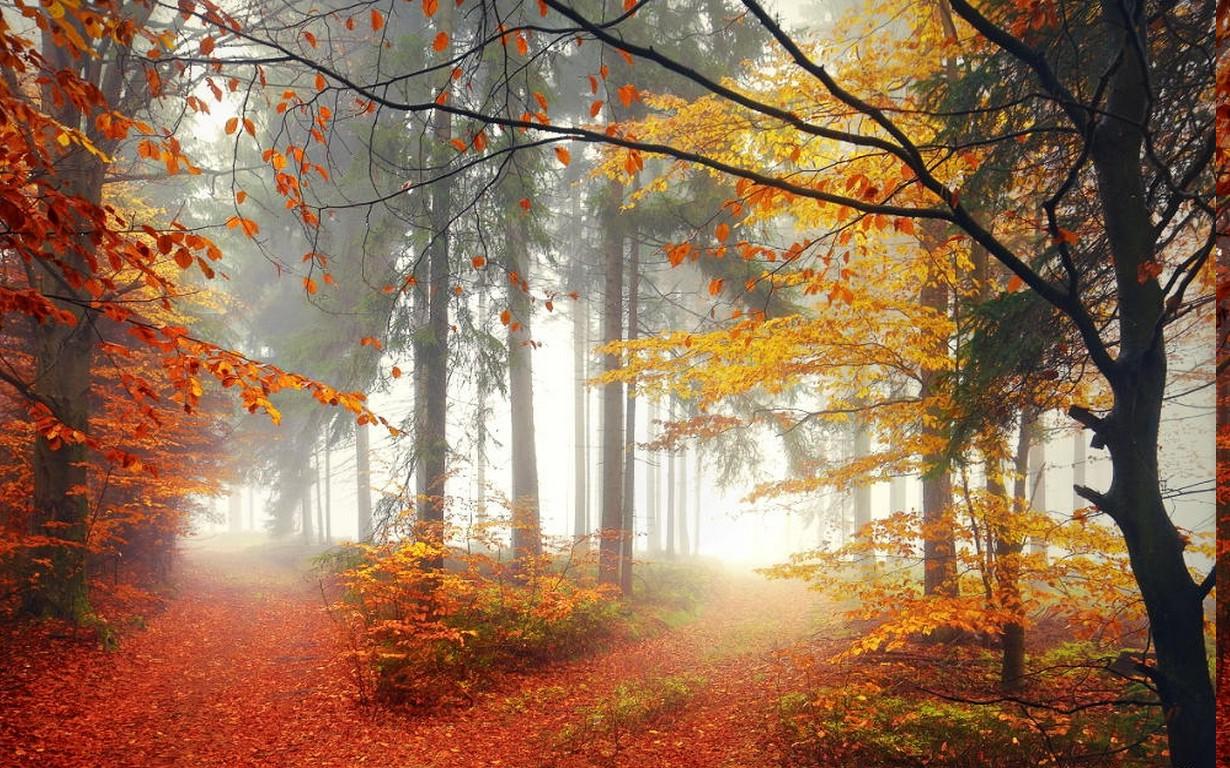 Картинки, осеннее утро в лесу картинки