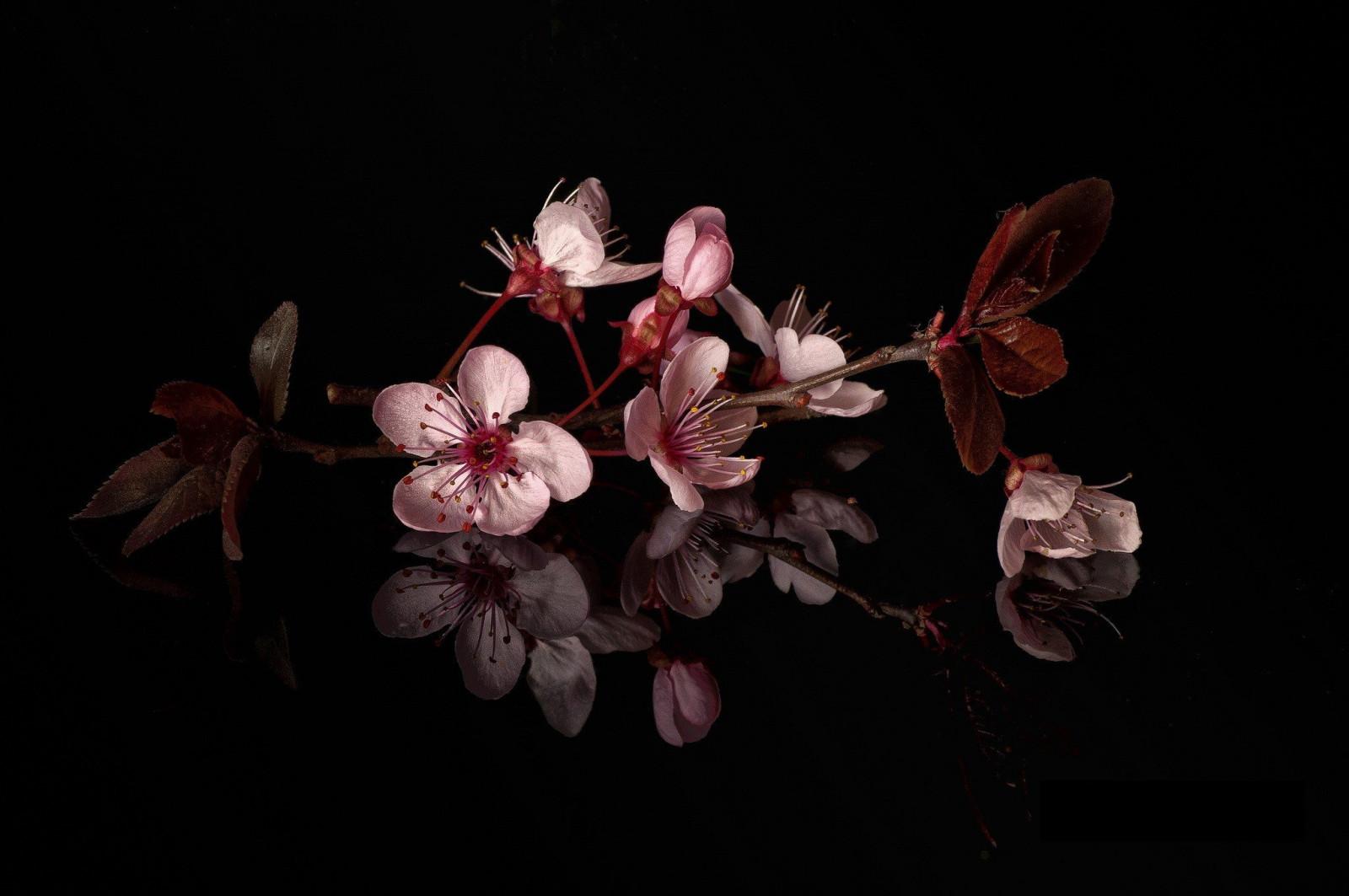 Праздником, картинки на телефон цветы на темном фоне